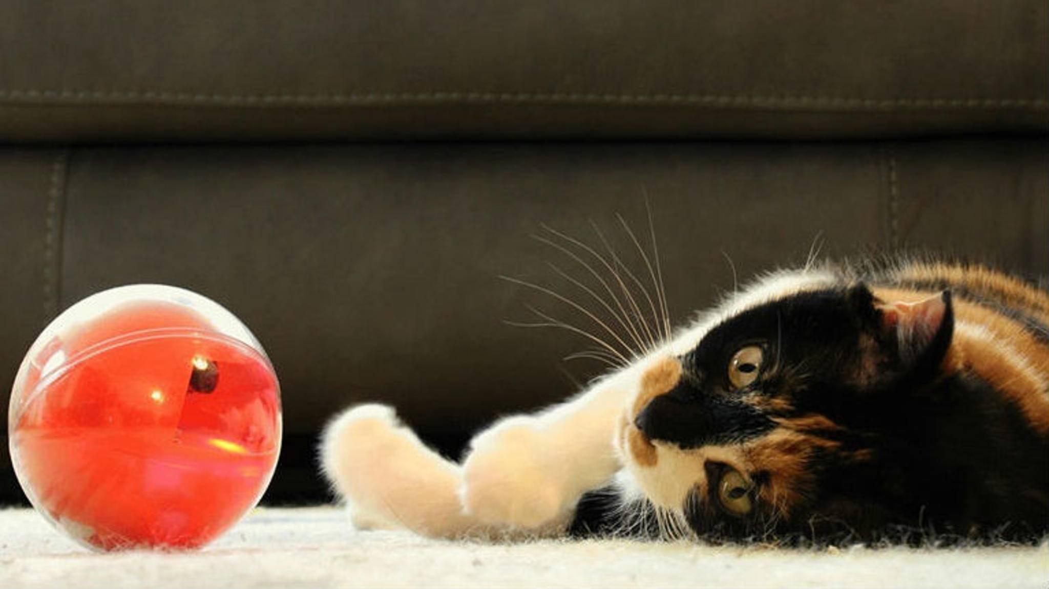 Mit dem PlayDate spielst Du mit Deiner Katze, auch wenn Du nicht zu Hause bist.