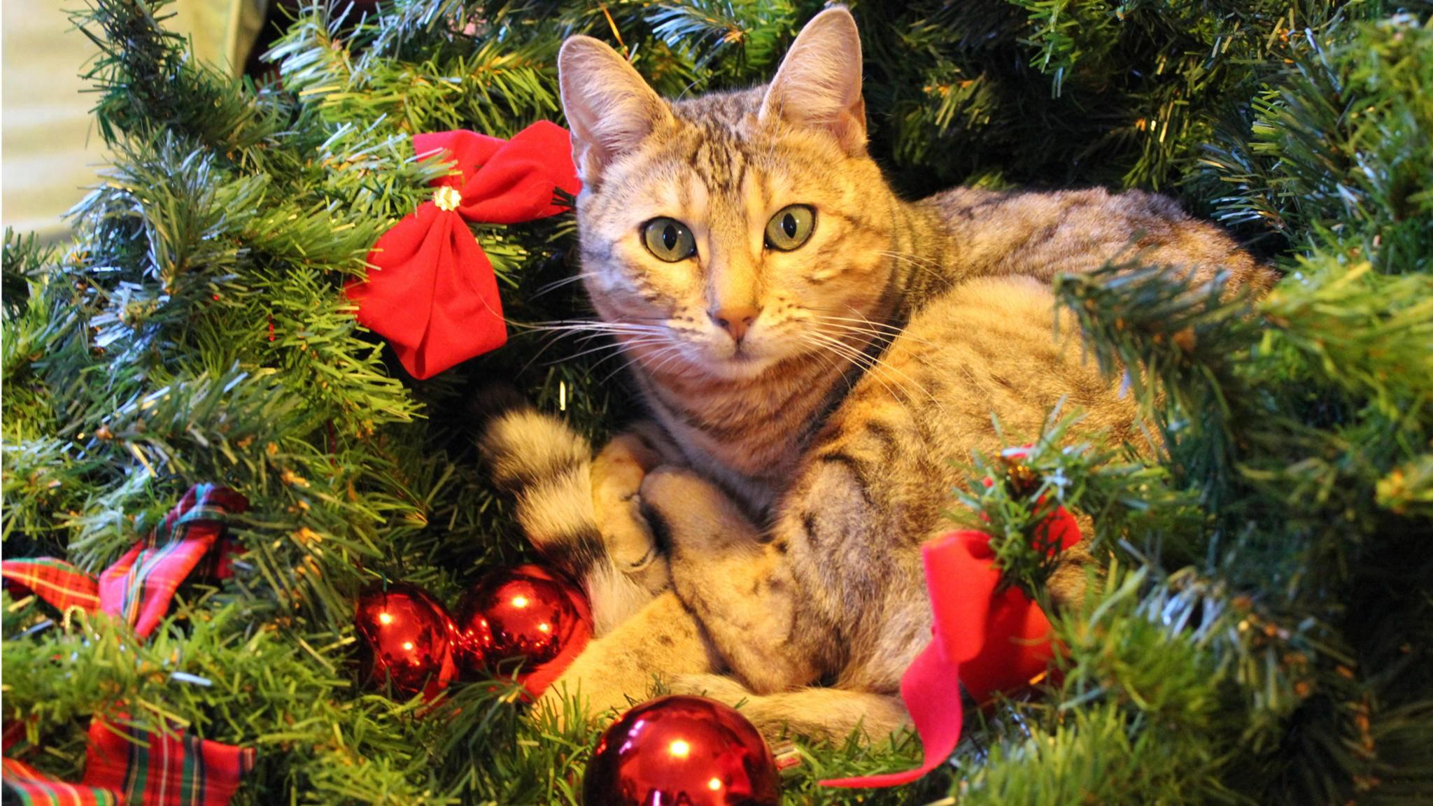 Katzen feiern wohl oder übel das Fest der Liebe auf Instagram.