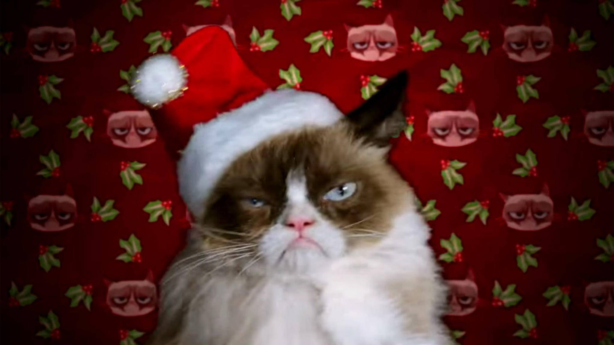 Der einzige Gesichtsausdruck von Grumpy Cat ist zugleich auch die adäquate Reaktion auf den Weihnachtsfilm, in dem das Fellknäuel die Hauptrolle spielt.