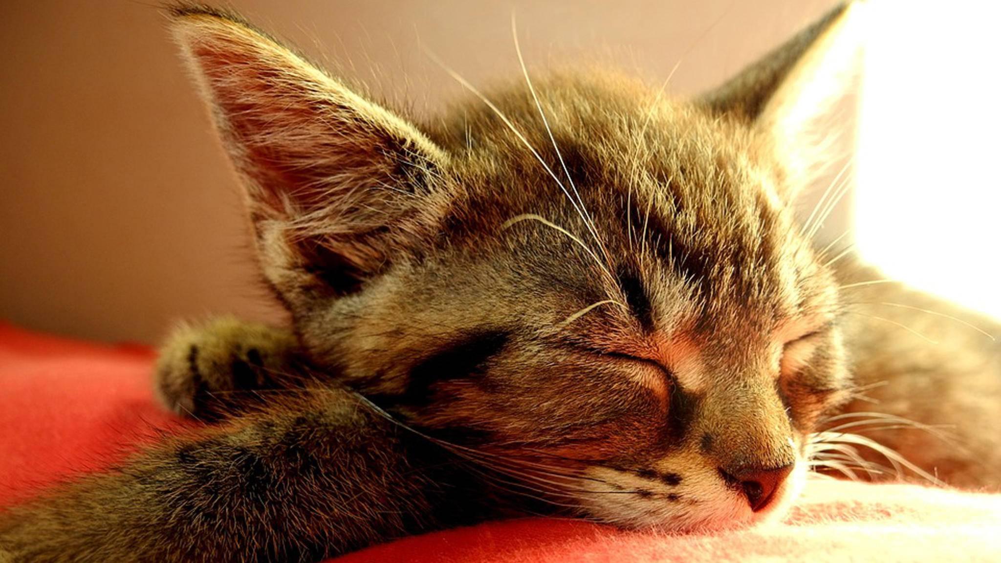Wer die Wahl hat, wählt Bilder von kleinen Kätzchen.