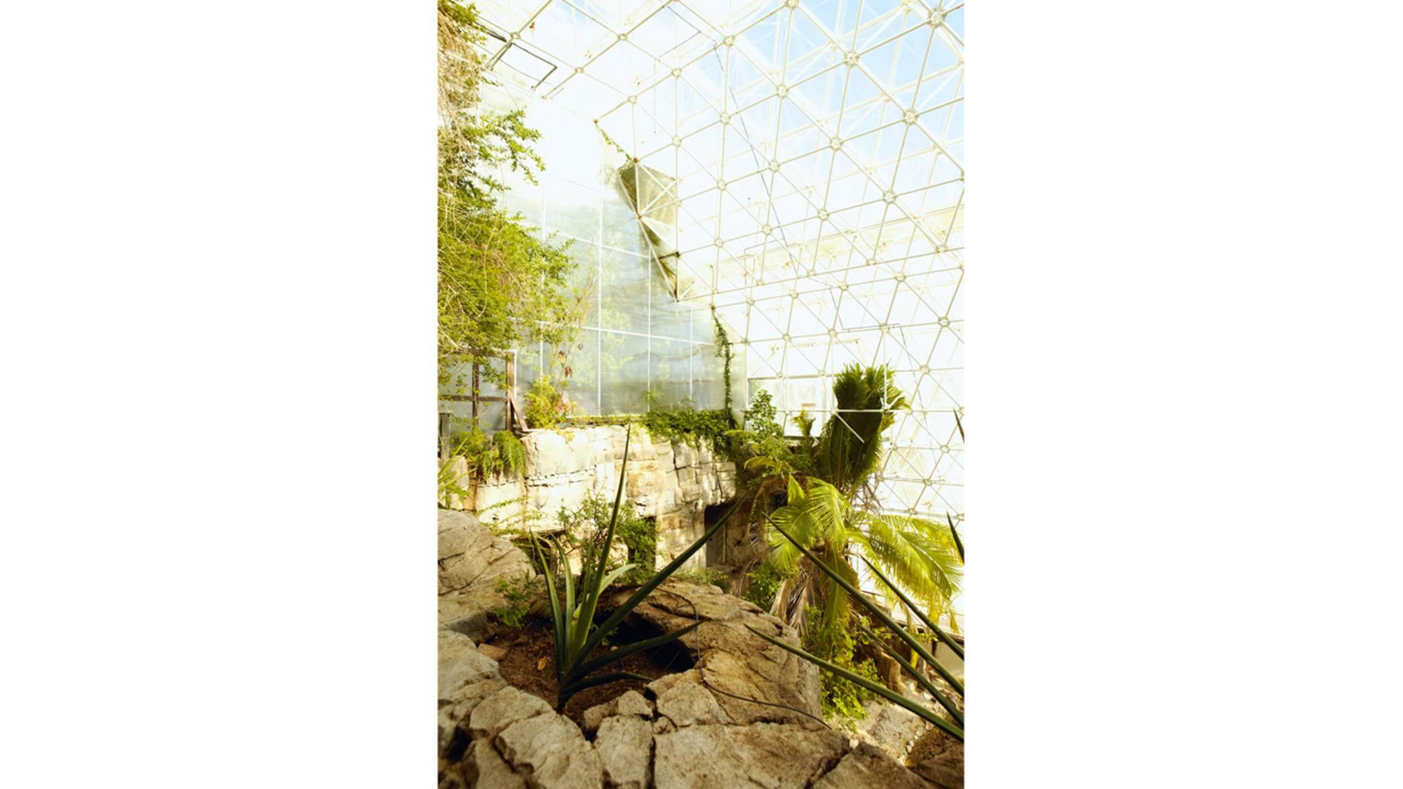 Ökosysteme: Von Wüste über Regenwald bis zu gemäßigten Klimazonen.