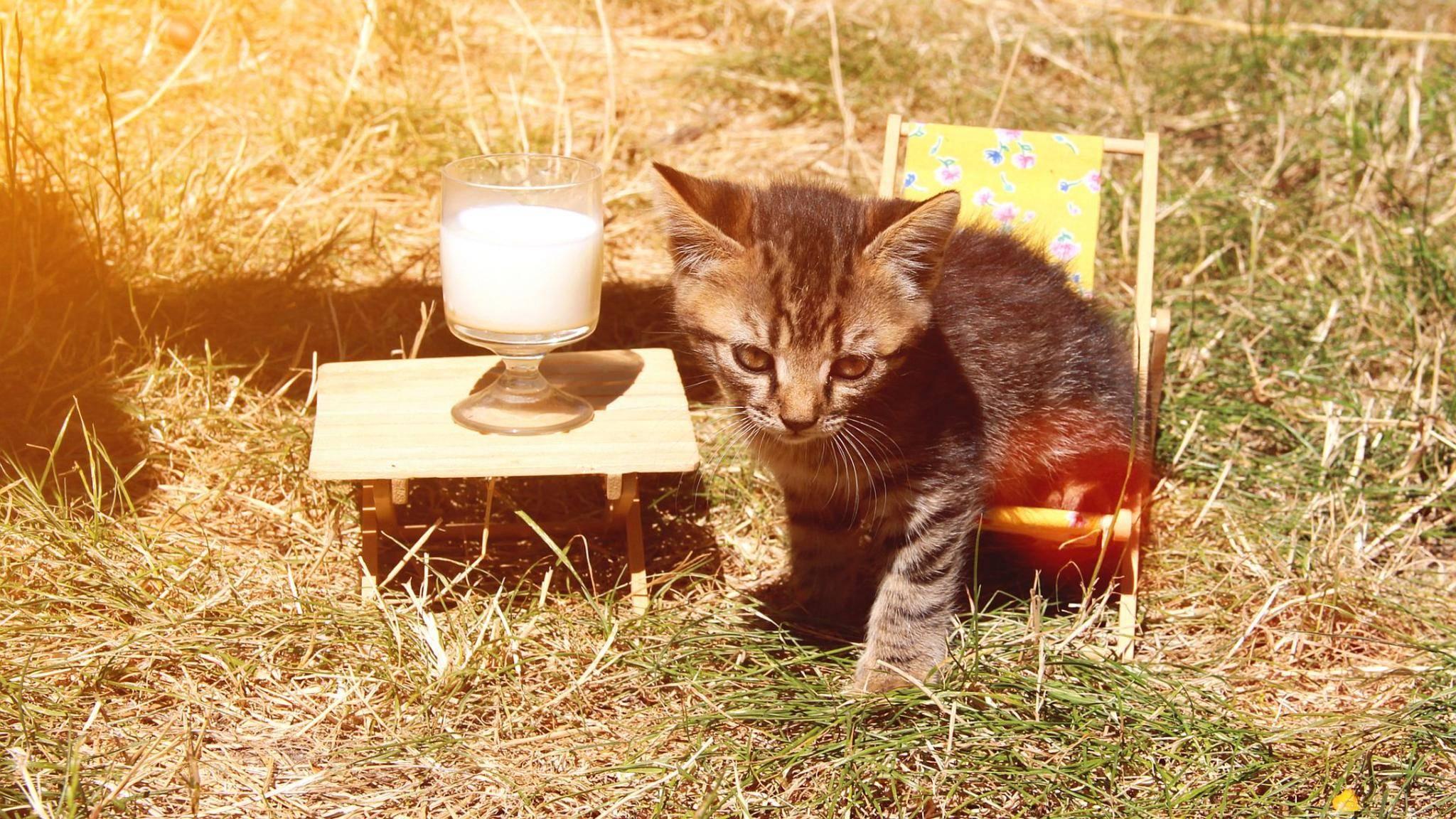 Bei Futterspielen für Haustiere sind der Kreativität keine Grenzen gesetzt.