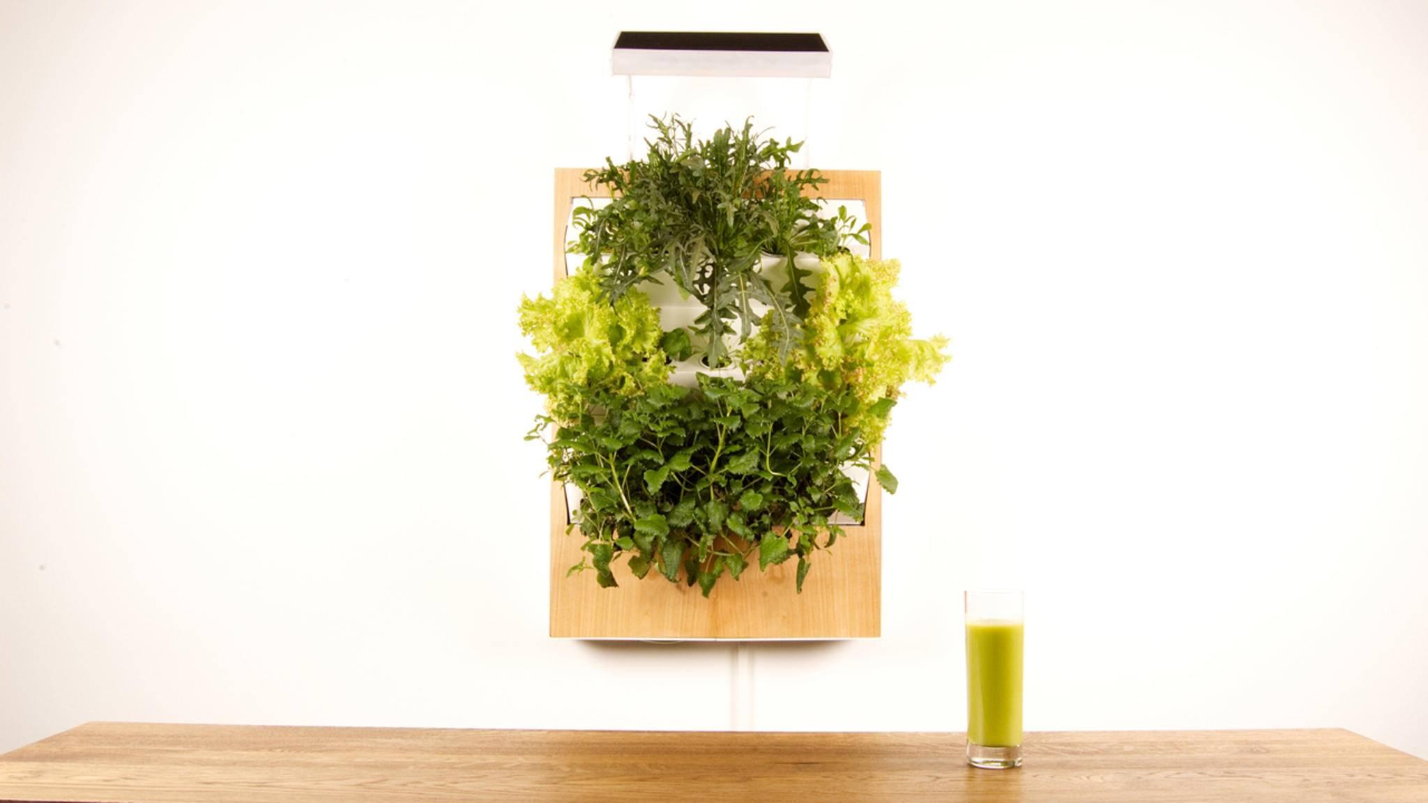 Herbert sieht aus wie ein lebendes grünes Gemälde und liefert Dir frisches Gemüse aus eigener Zucht.