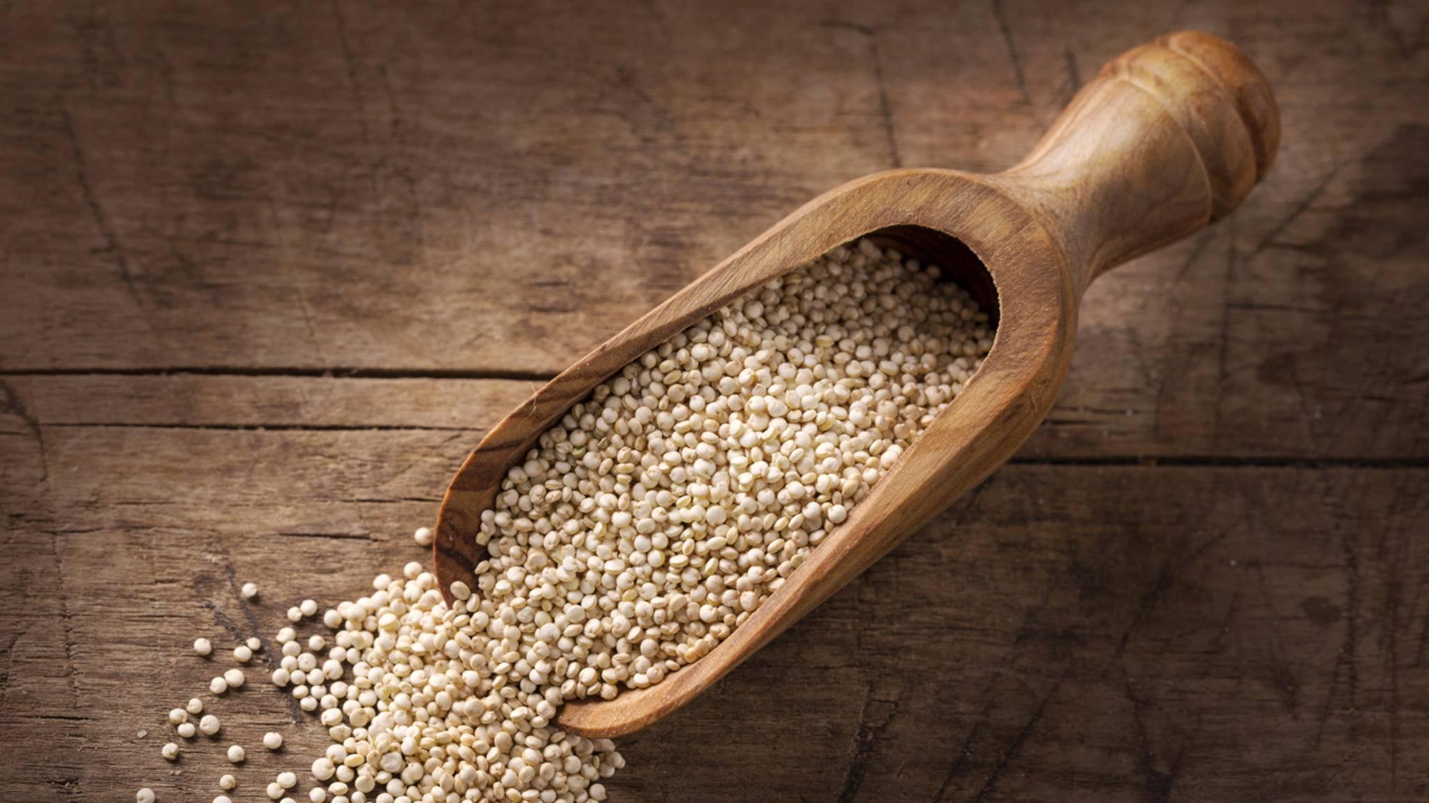 Quinoa liegt bei Foodies im Trend. Nun machen sich Wissenschaftler an die Entwicklung neuer Züchtungen.