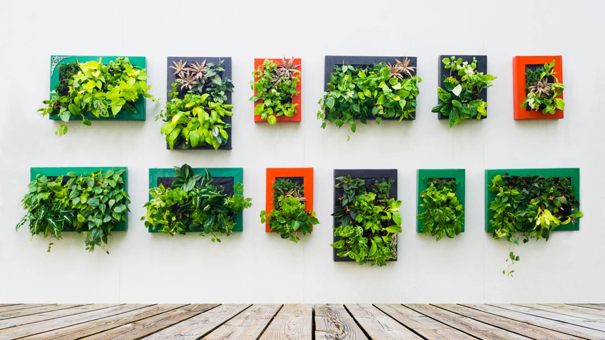 """""""Es grünt so grün..."""" Vertikale Gärten finden an Wänden und auf kleinem Raum Platz."""