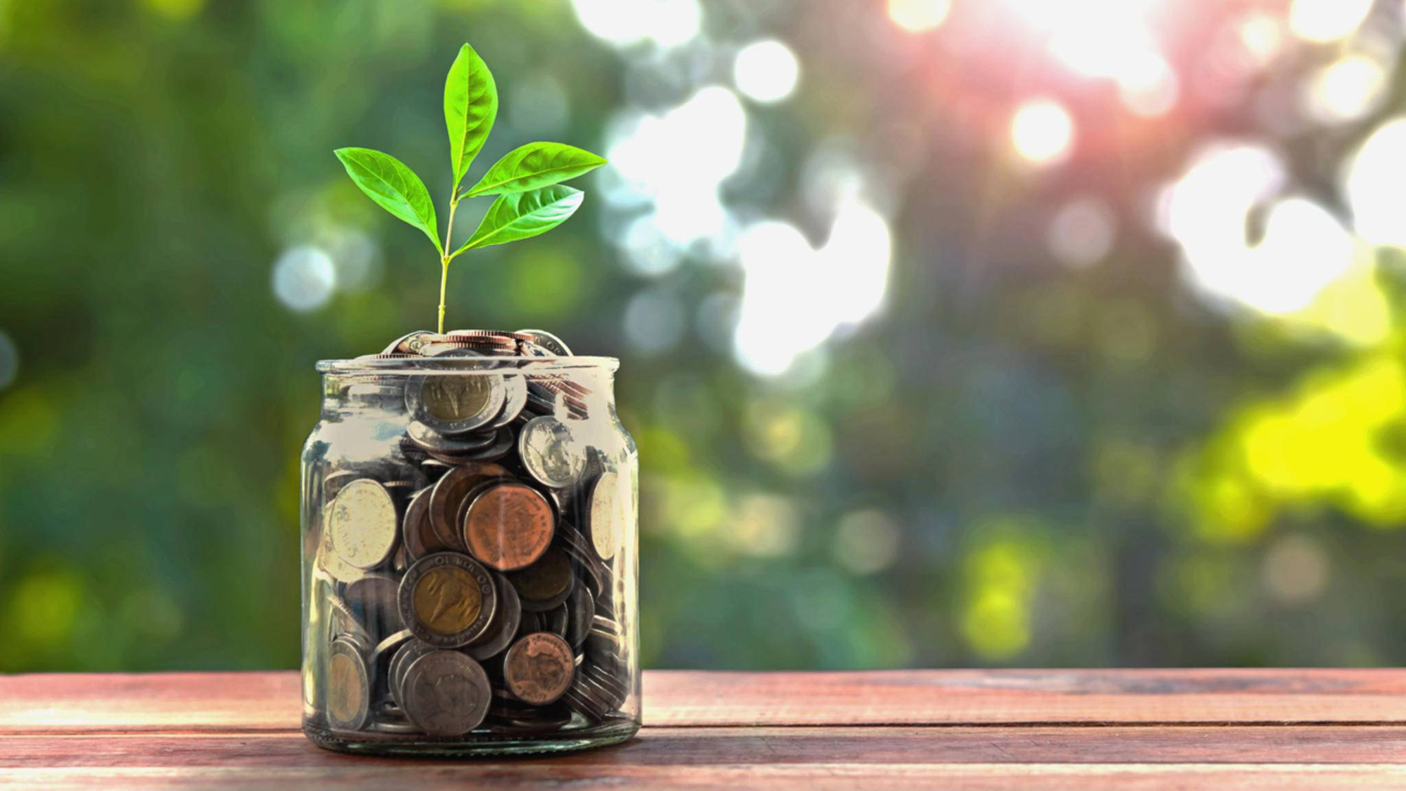 Geld sparen und umweltbewusster leben – mit diesen Tipps kein Problem!