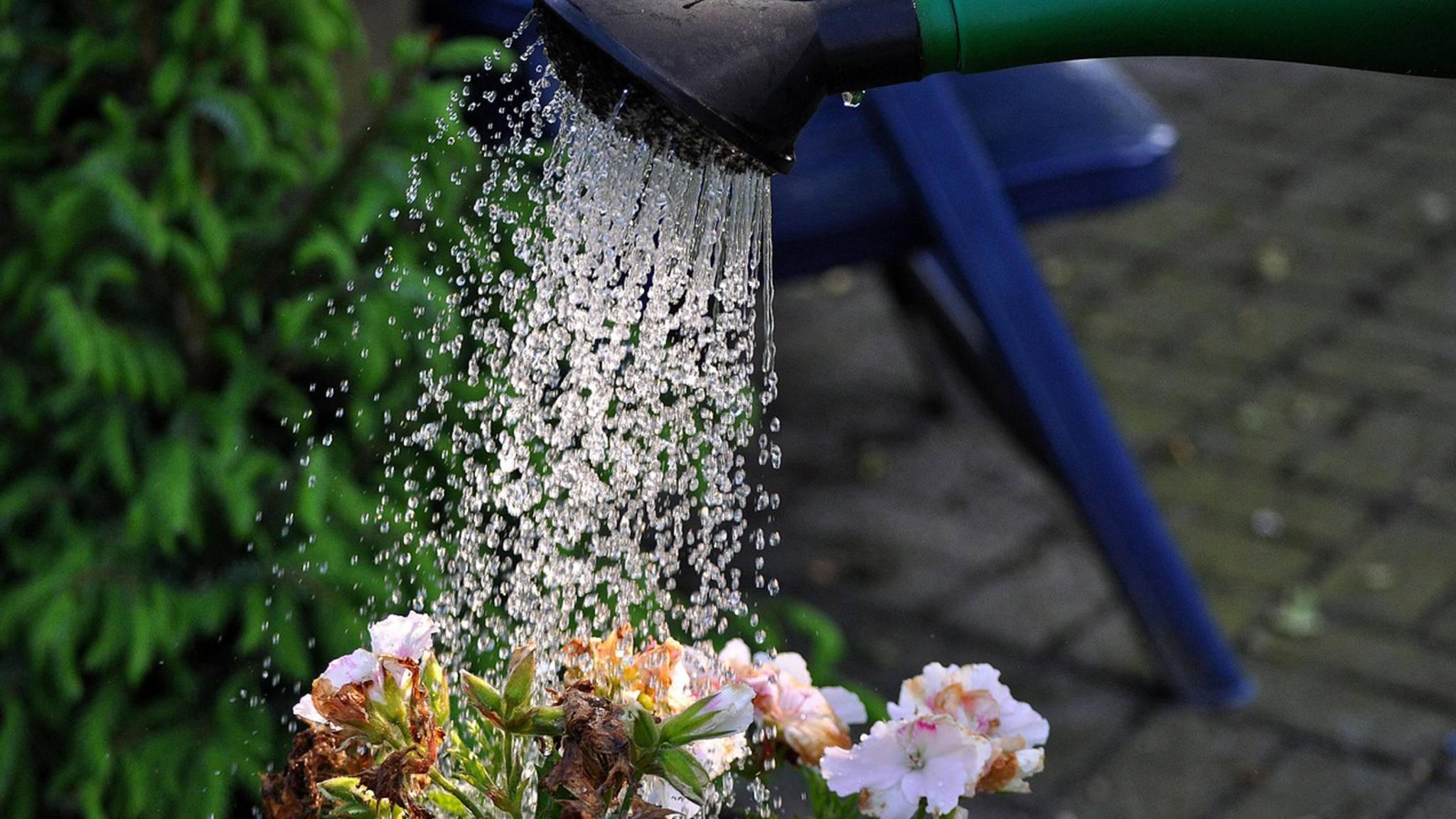 Alles andere als Abfall: Der Kaffeesatz sollte zwei- bis viermal jährlich im Garten Verwendung finden – auch verdünnt mit Wasser als Flüssigdünger.