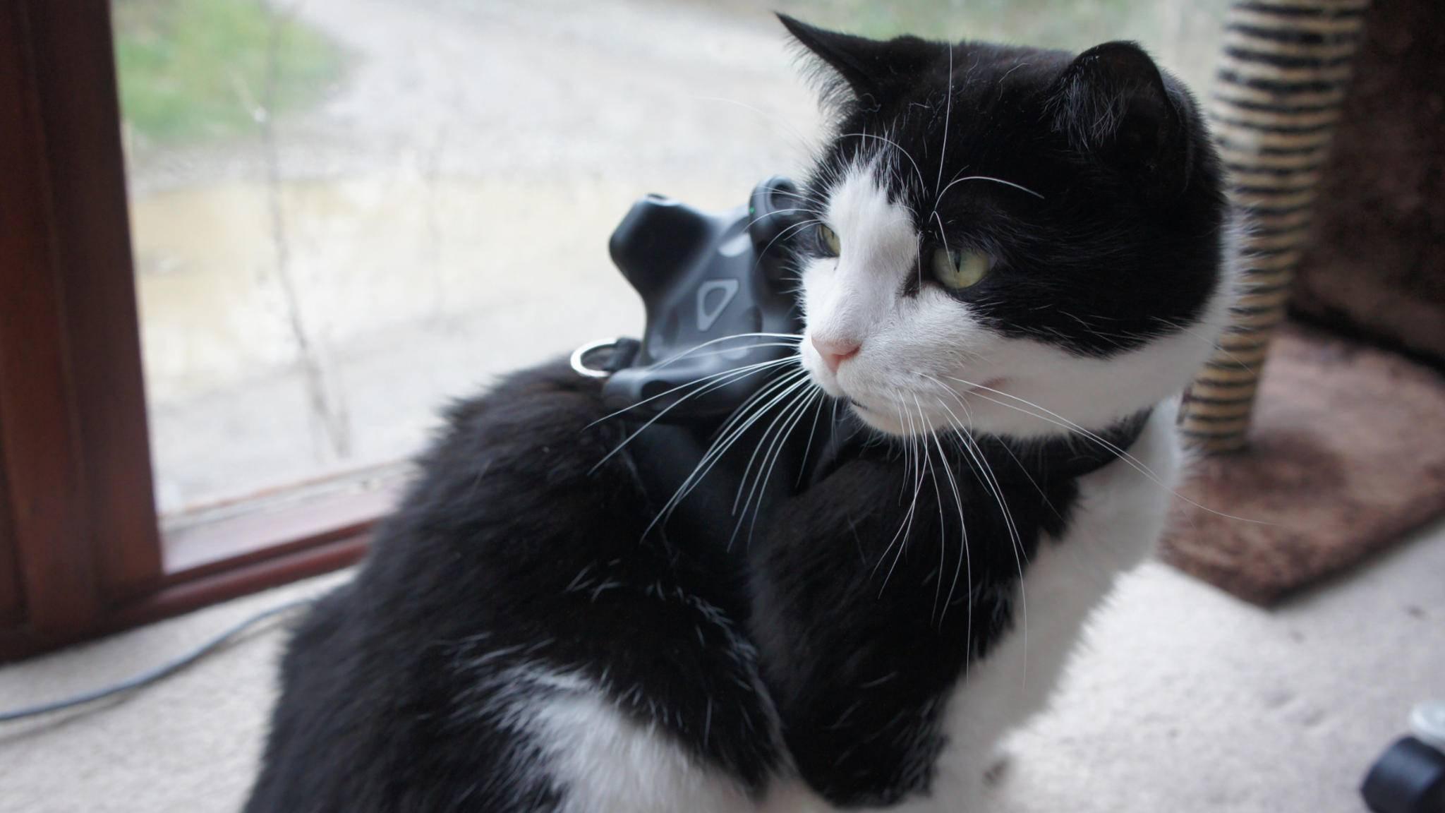 Unfallgefahr gebannt: VR-Tracker für Katzen.