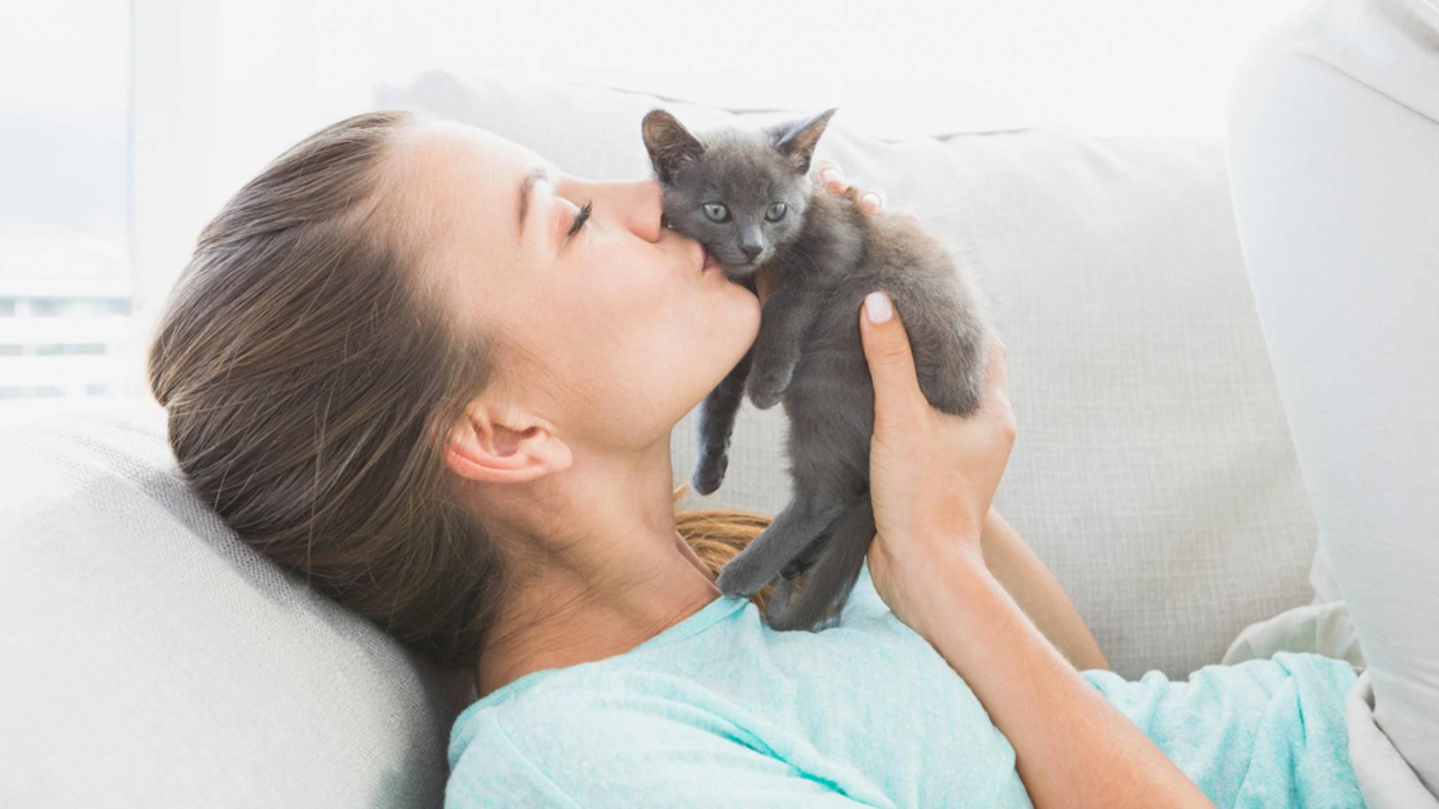 Es darf weiter geschmust werden: Eine Studie zeigt, dass Katzen den Kontakt mit Menschen mögen.