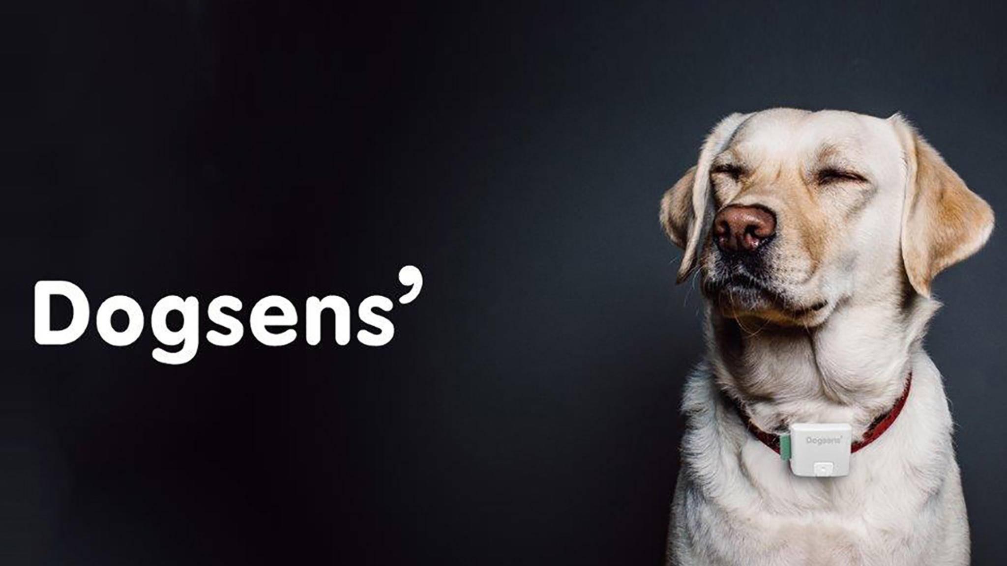 Dogsens will Hund und Herrchen glücklich machen.
