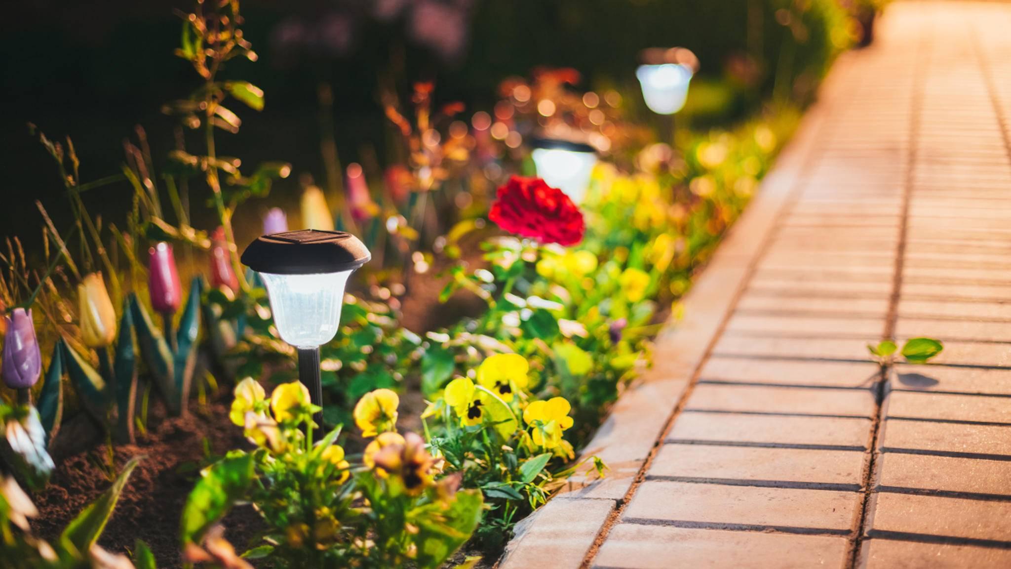 Gartenplaner-Apps: Kostenlose Software & Apps für eine grüne Oase