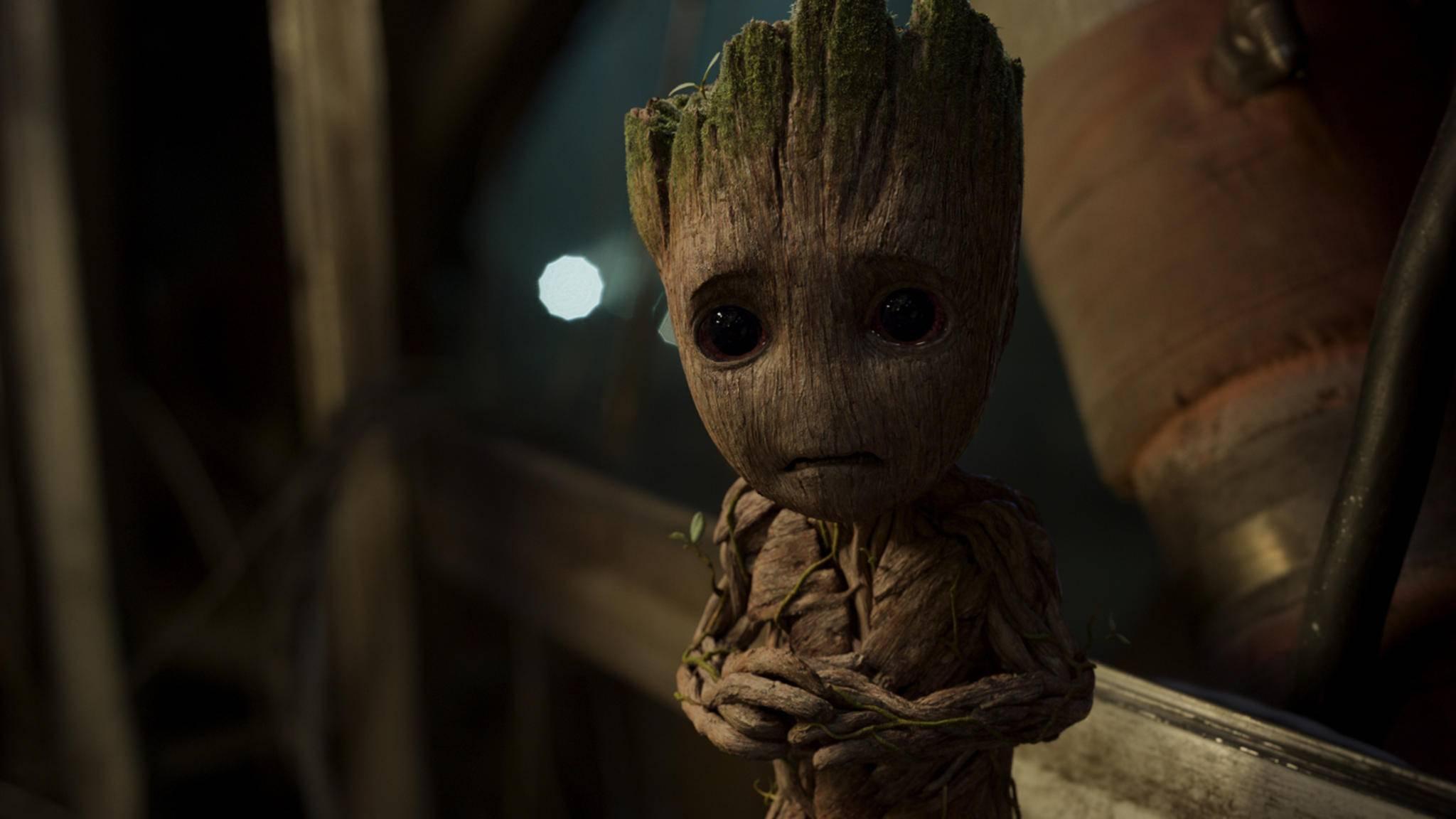 Nicht traurig sein, Groot! Am Kinostart scheint erst einmal nichts zu rütteln!
