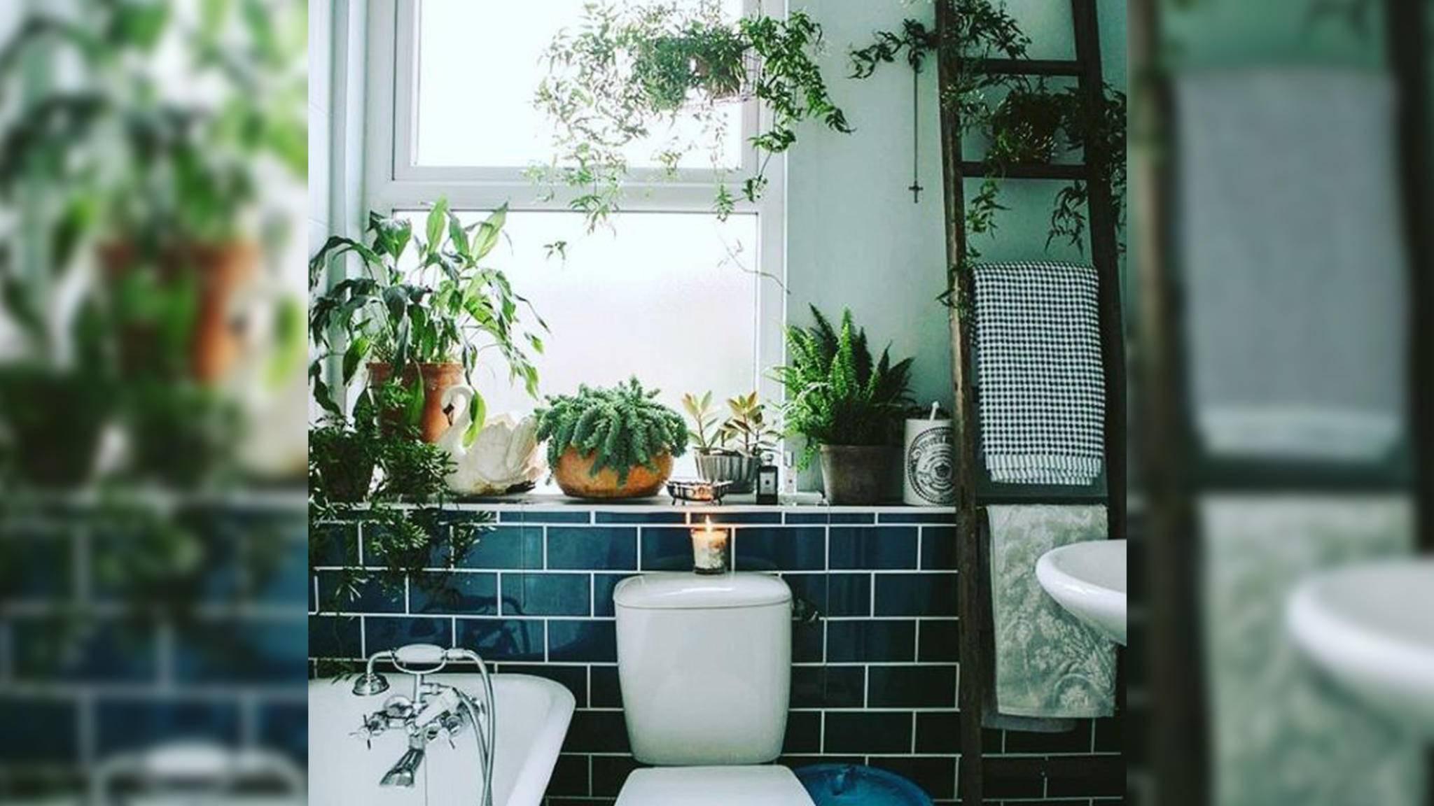 Shower Plants verwandeln Dein Badezimmer in eine grüne Oase.