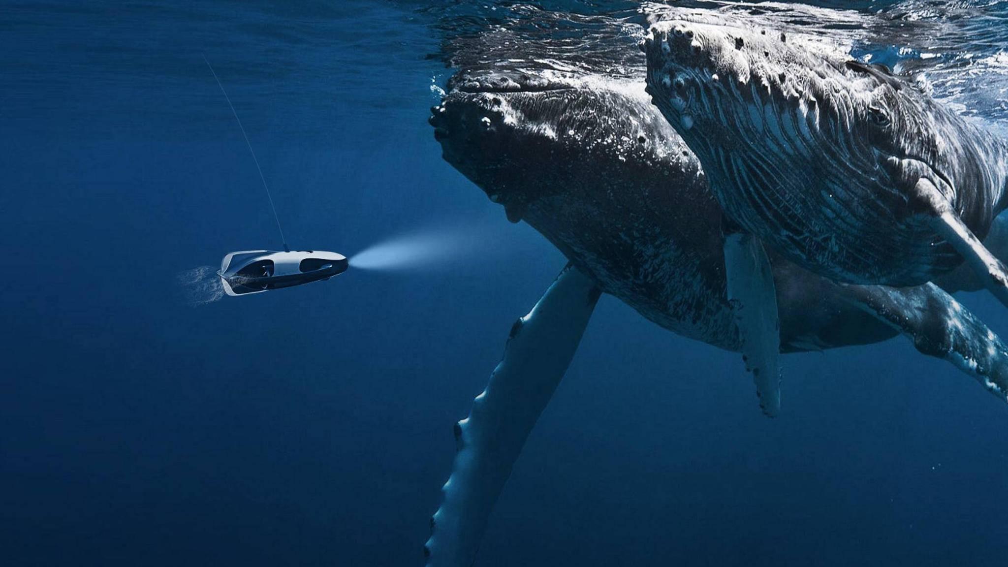 Auge in Auge mit dem Wal: PowerRay lässt Drohnenpiloten die Meerestiefen erkunden.