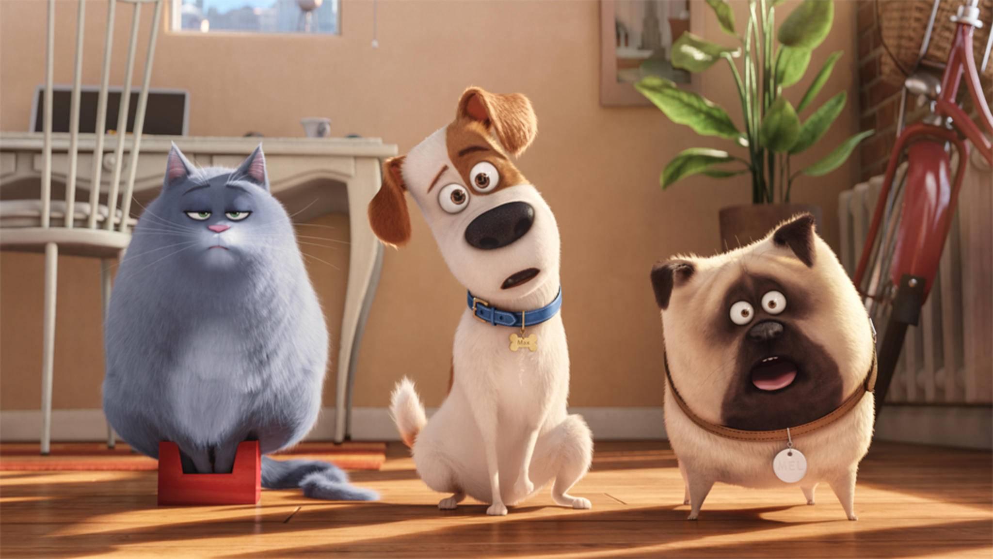 """Chloe, Max und Mel aus """"Pets"""" werden von namhaften deutschen Schauspielern und Comedians gesprochen."""