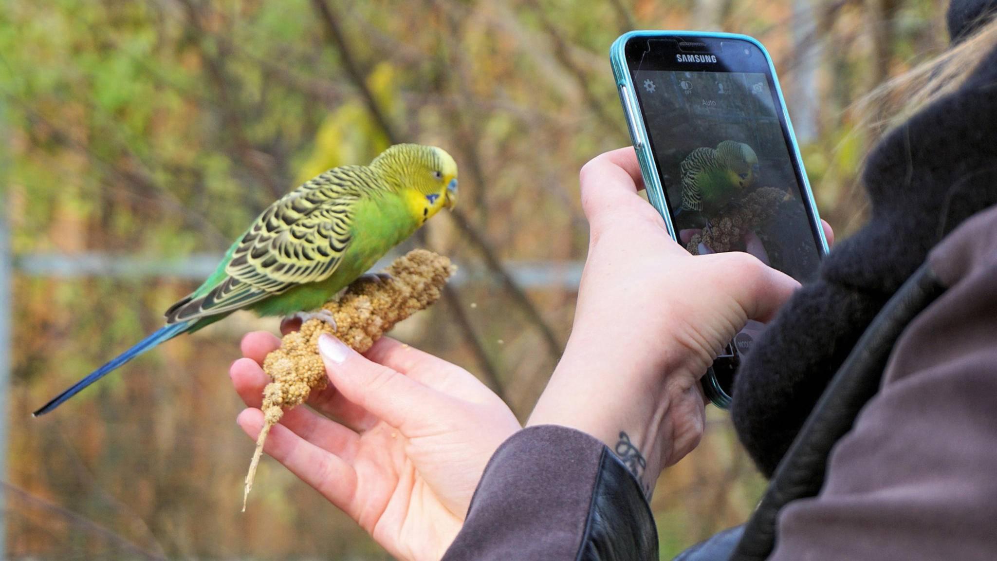 Ja, was haben wir denn da? Mit der passenden App kannst Du ganz leicht Vögel bestimmen.