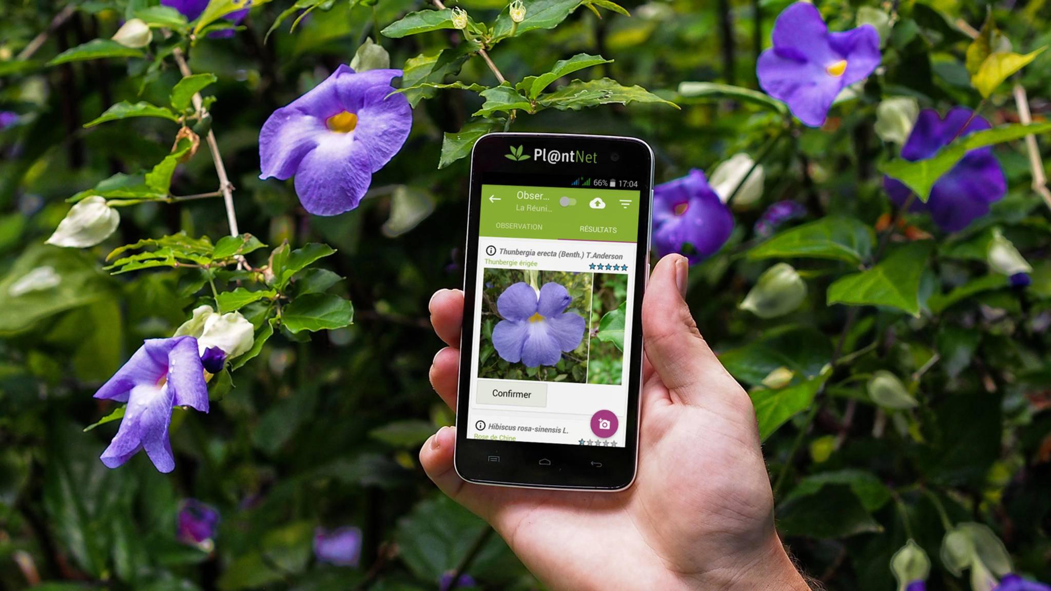 plantnet-app pflanzen bestimmen