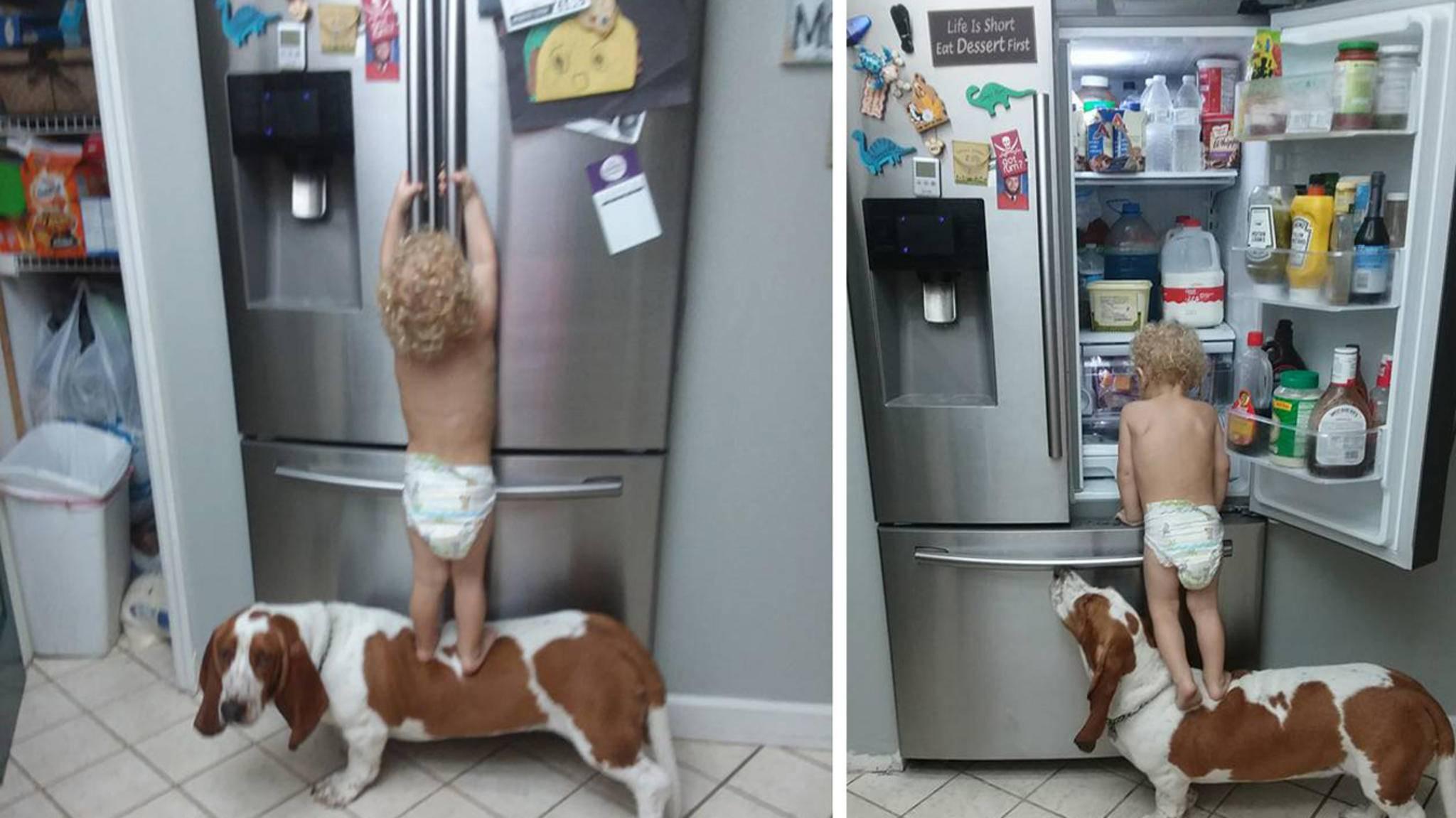 Klein, aber oho: Dieses Kleinkind weiß, wie es an die Leckereien im Kühlschrank kommt.