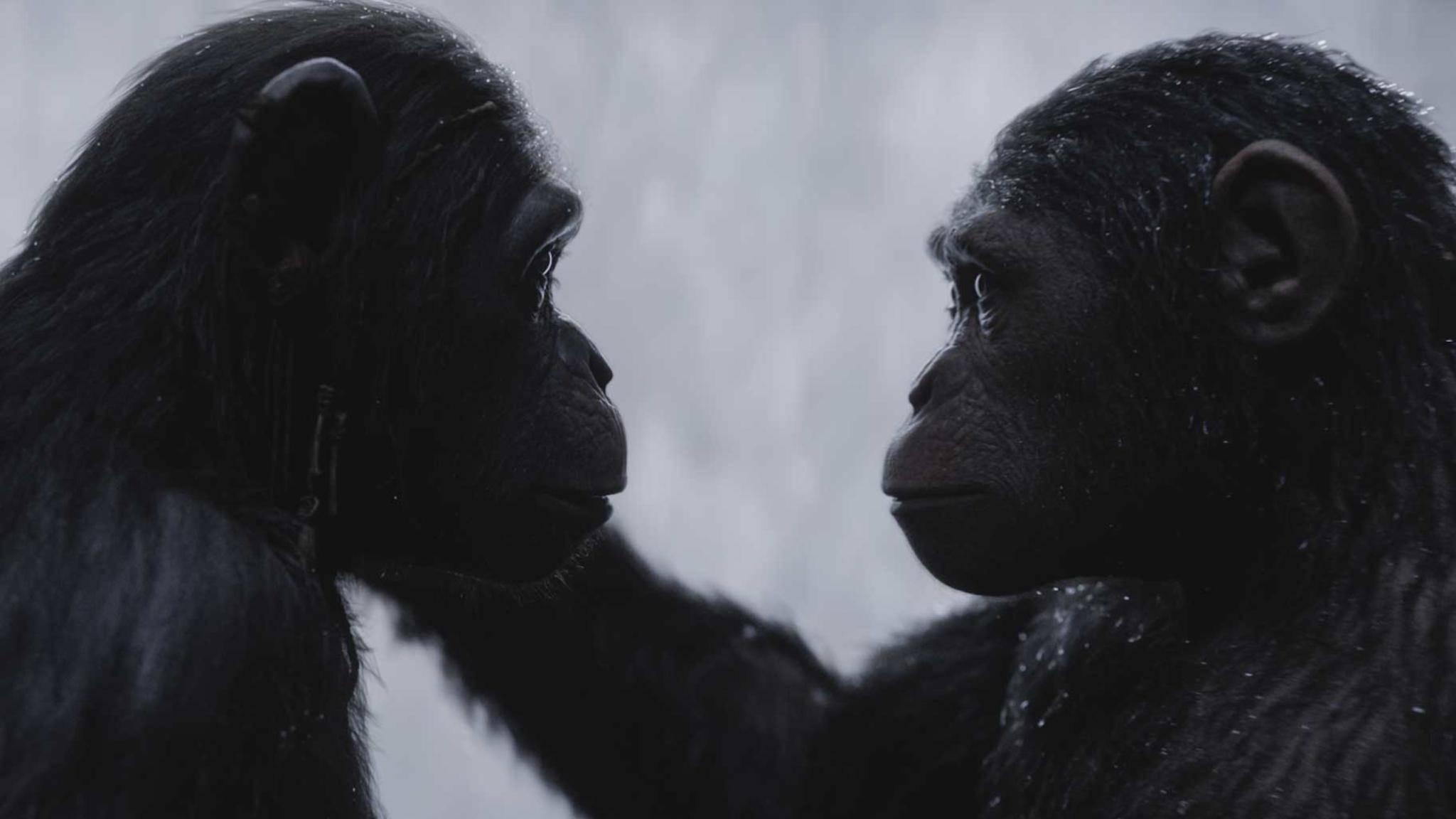 """In welcher Reihenfolge Du die """"Planet der Affen""""-Filme gucken solltest, verraten wir Dir in dieser Liste."""