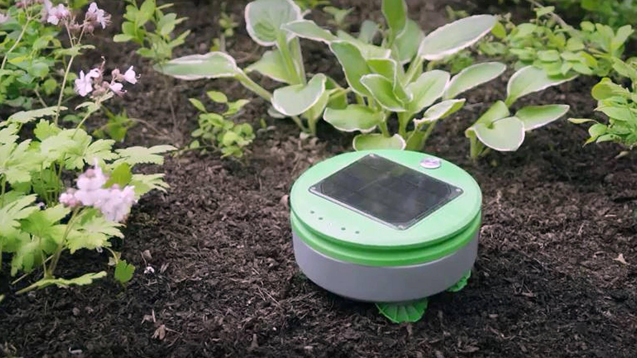 Tertill soll für einen unkrautfreien Garten sorgen.