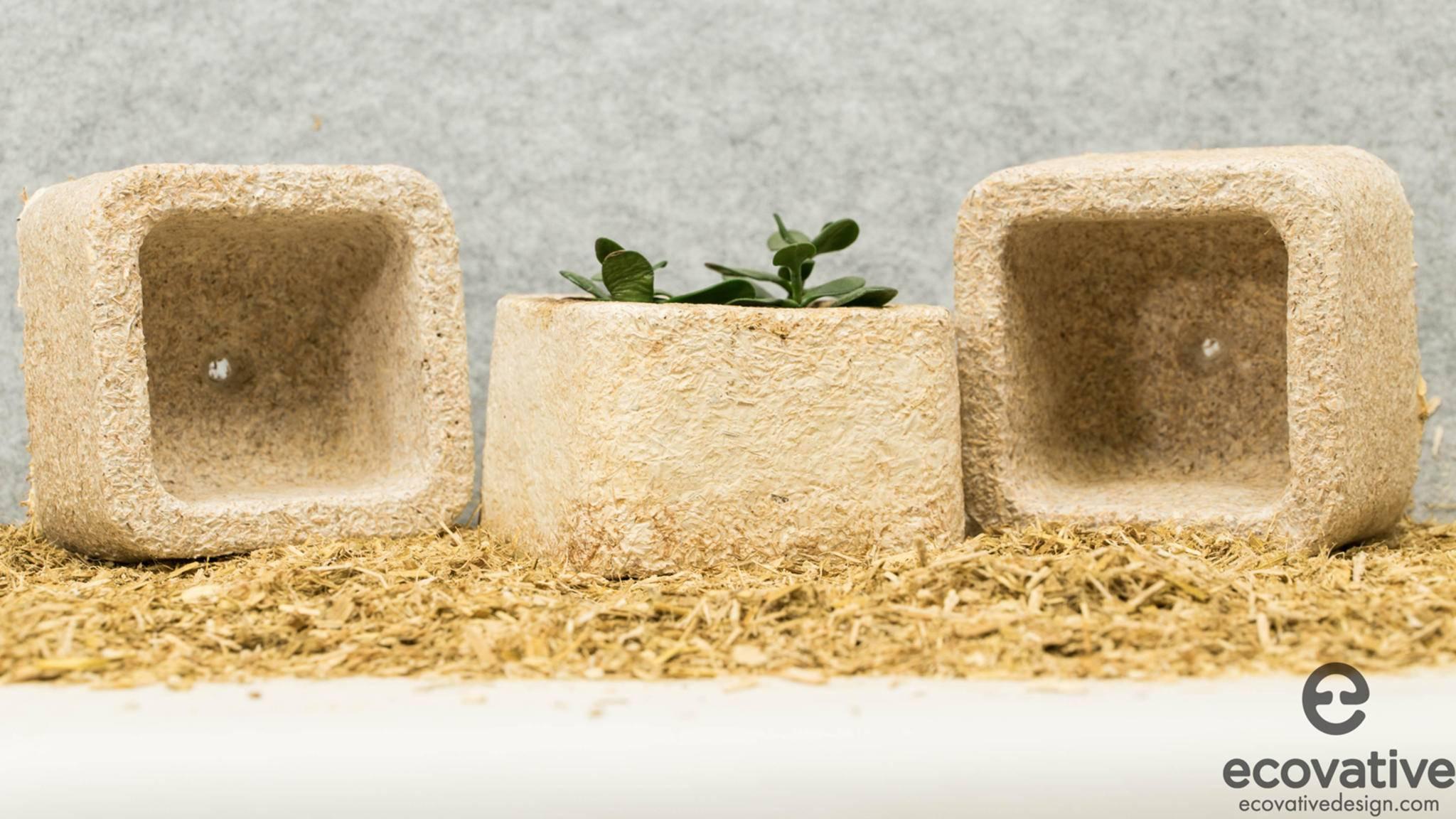 Mit Grow-It-Yourself kann man Gegenstände wortwörtlich wachsen lassen.