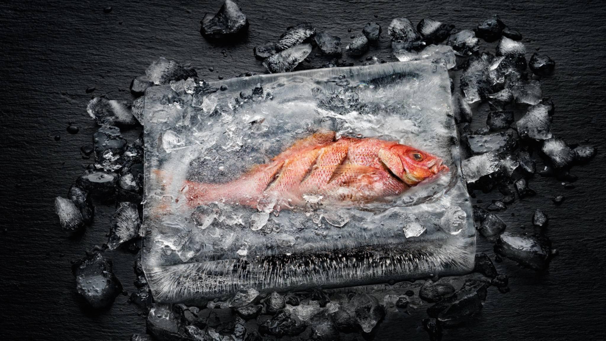 Selbst einen Fisch im Eismantel konnten die Testköche von Miele bei ihrer Vorführung erfolgreich zubereiten – ohne, dass das Eis geschmolzen wäre.