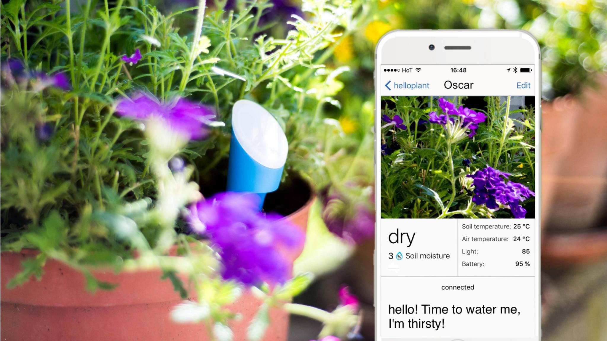 Hello Plant gibt durstigen Pflanzen eine Stimme.