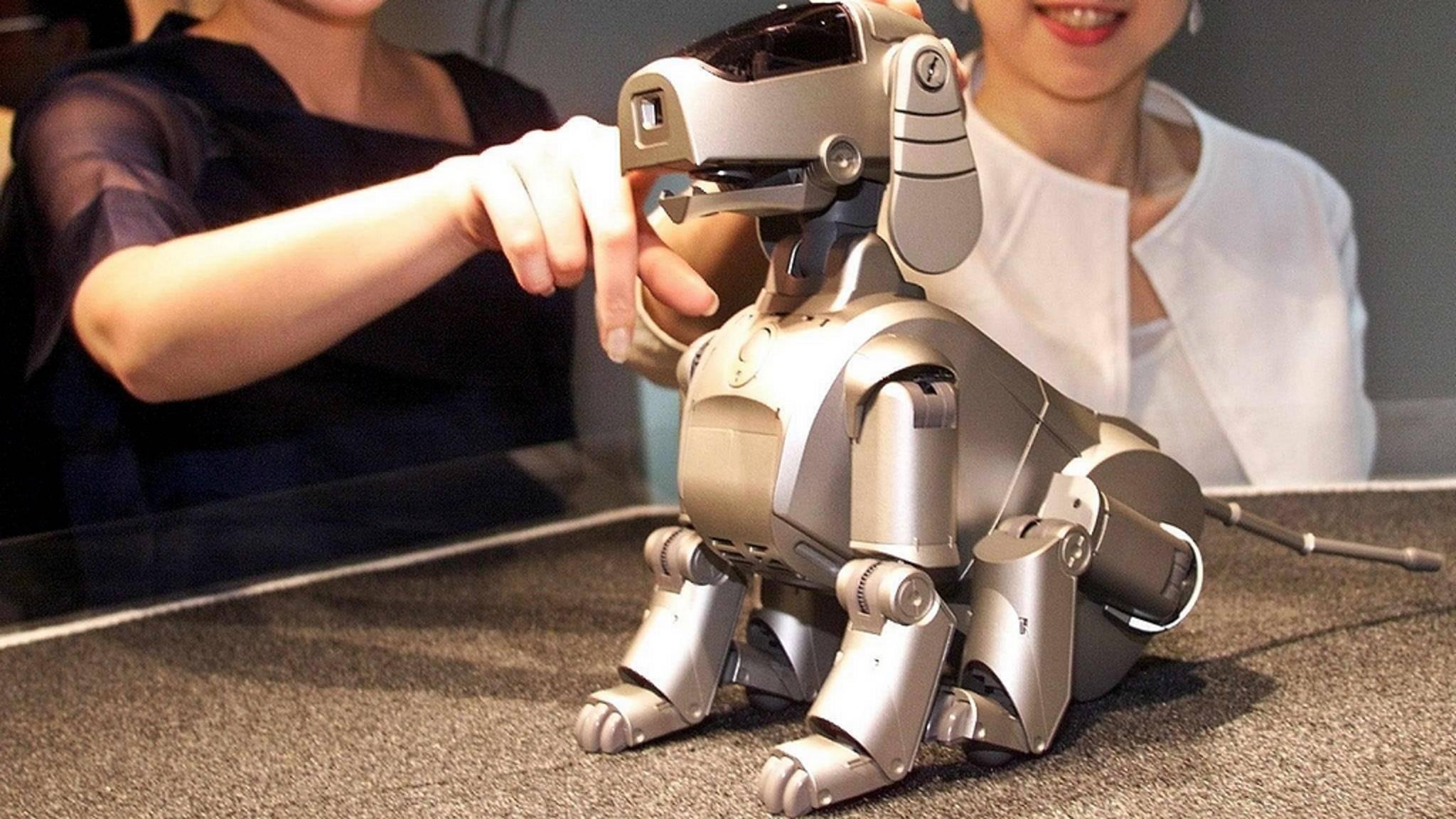 Der Roboter-Hund Aibo soll offenbar eine Neuauflage bekommen.