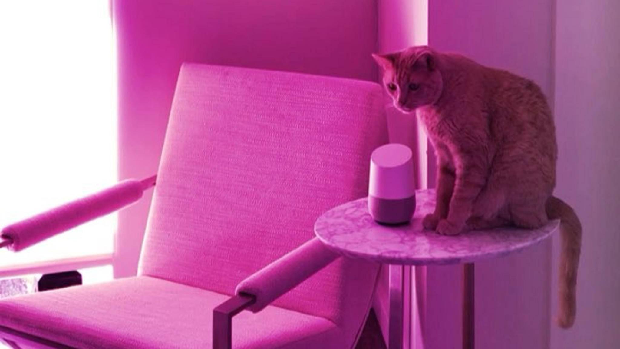 Katzen würden Google Home kaufen ...