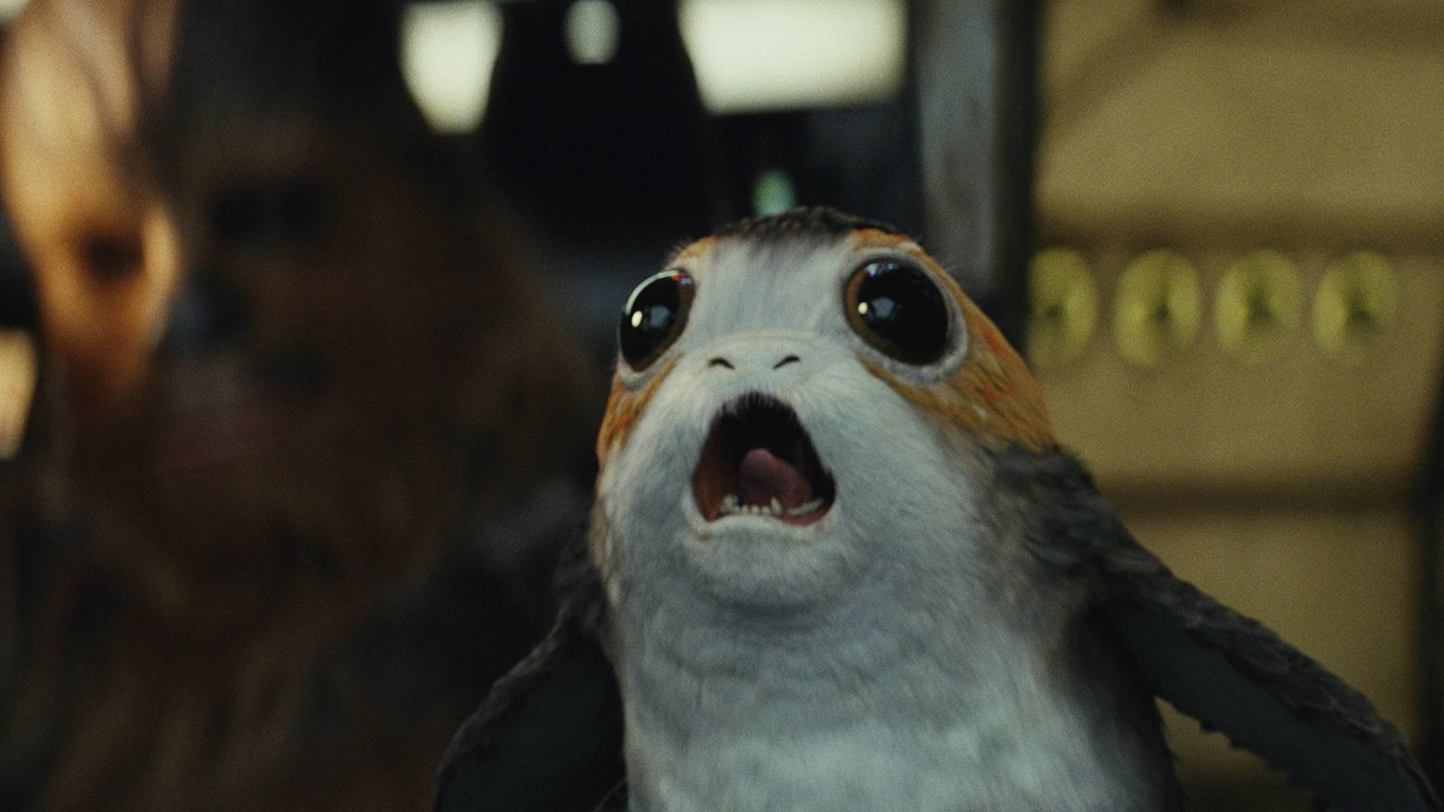 """Sie sind süß, sie sind pelzig – und sie sind die heimlichen Helden von """"Star Wars: Die letzten Jedi"""": die Porgs."""