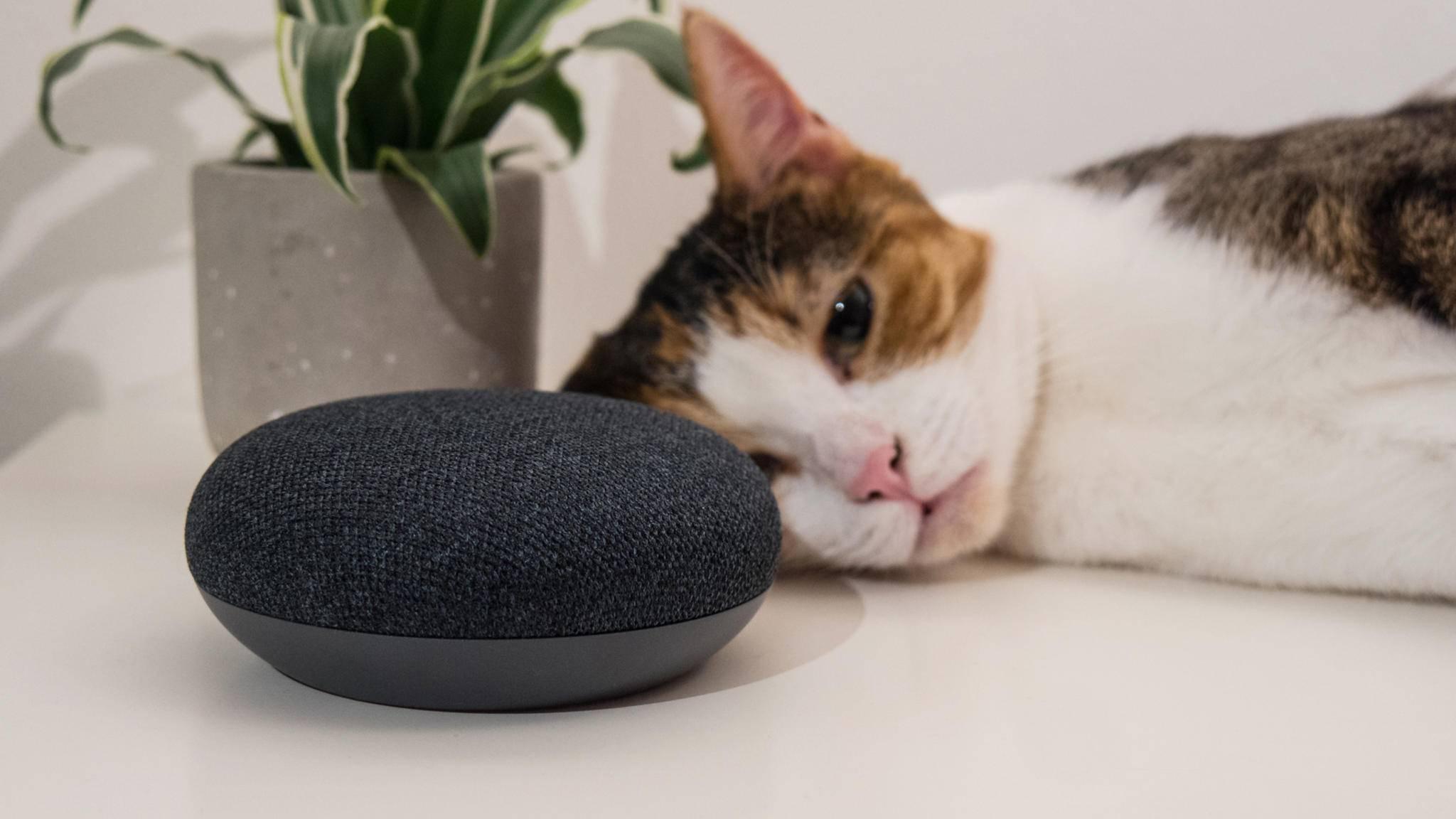Google Home hilft Dir, Deine Katze besser zu verstehen.
