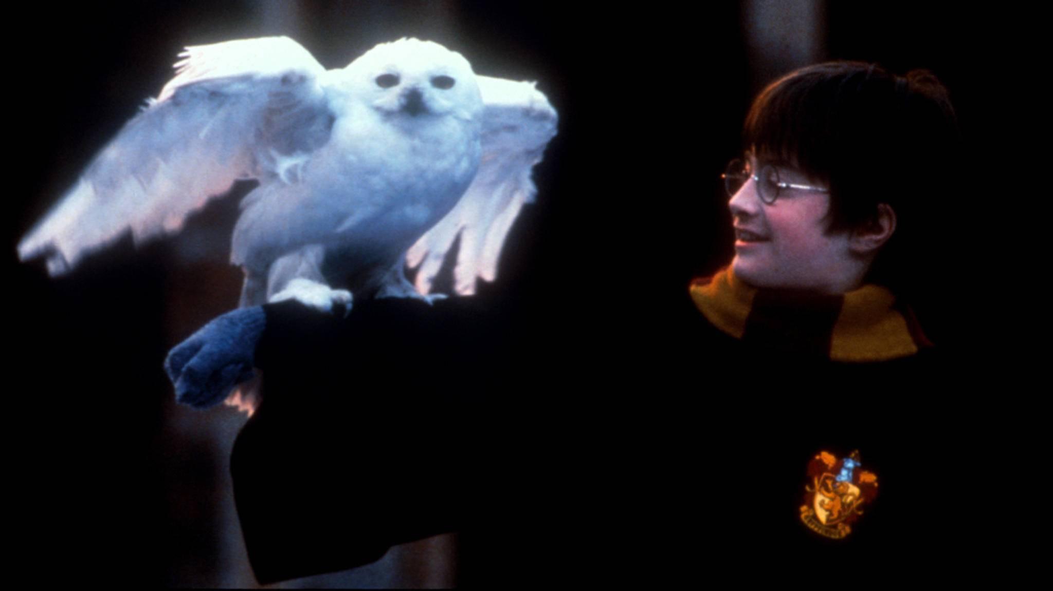 """Die """"Harry Potter""""-Reihe gewinnt bis heute immer neue Anhänger – und liefert den Stoff für zahlreiche Memes."""