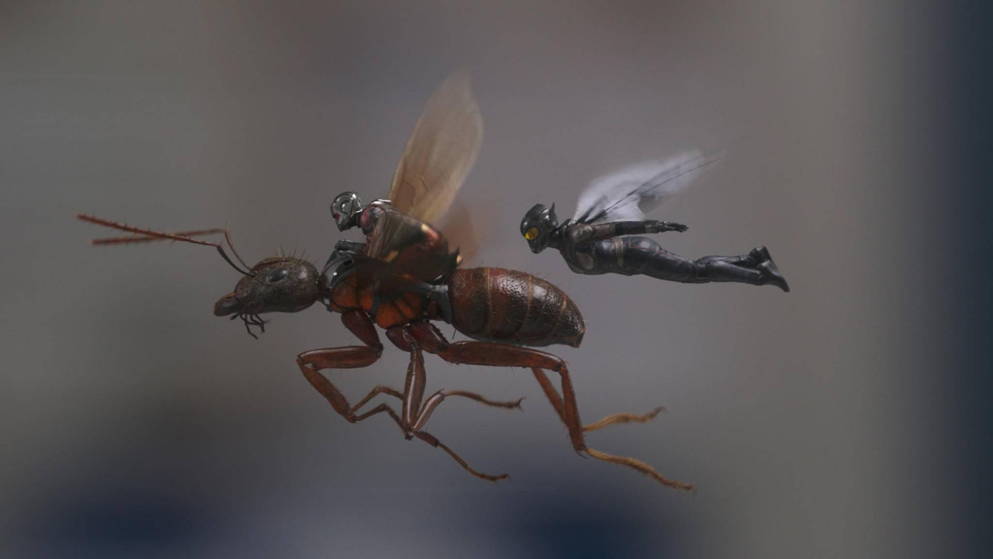 """""""Ant-Man and the Wasp"""" sollen im Sequel unter anderem Janet van Dyne zur Hilfe eilen ..."""