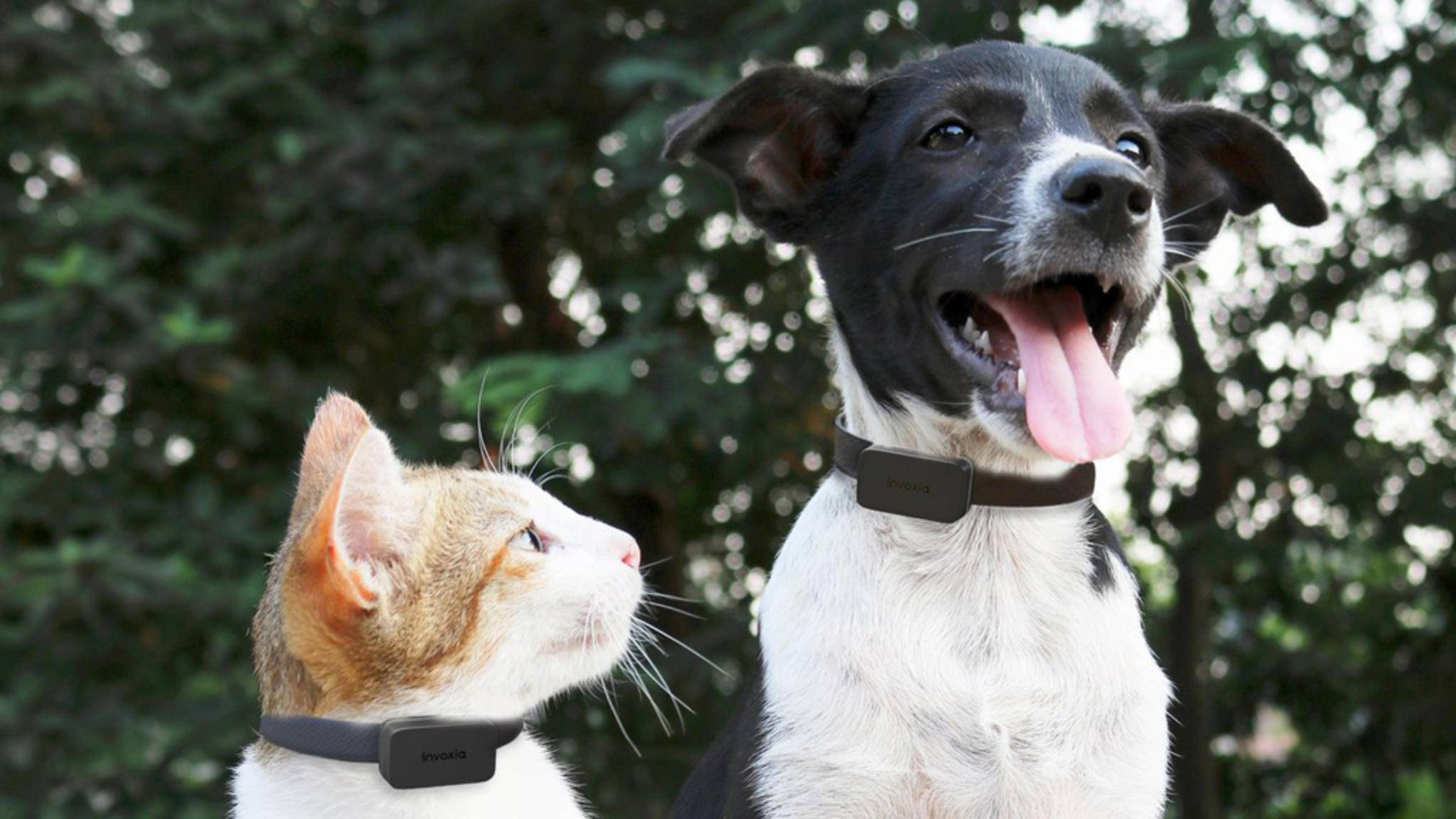 Katze und Hund bleiben mit dem Pet Tracker im Blick.