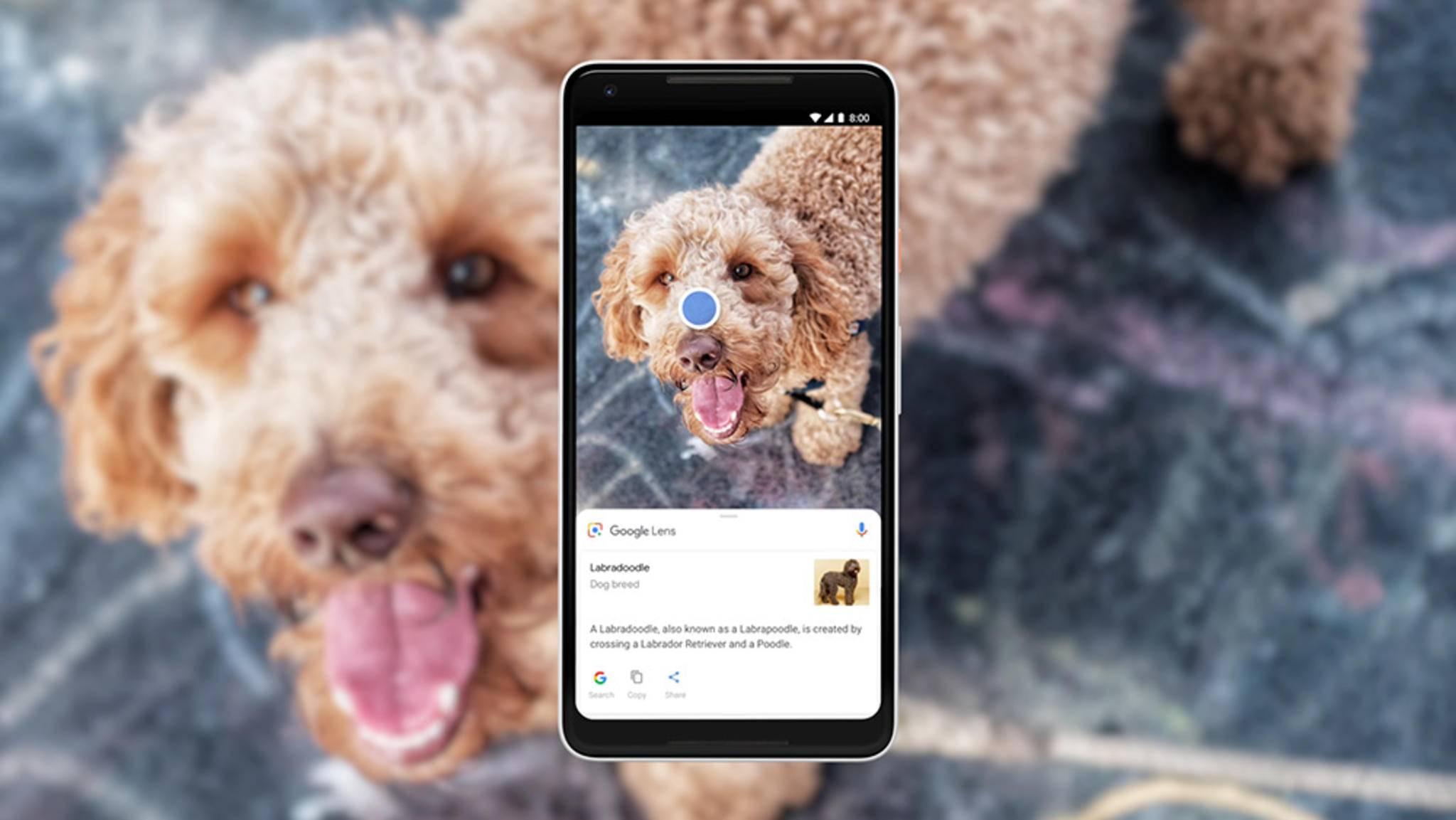 Google Lens erkennt künftig in Echtzeit Objekte.