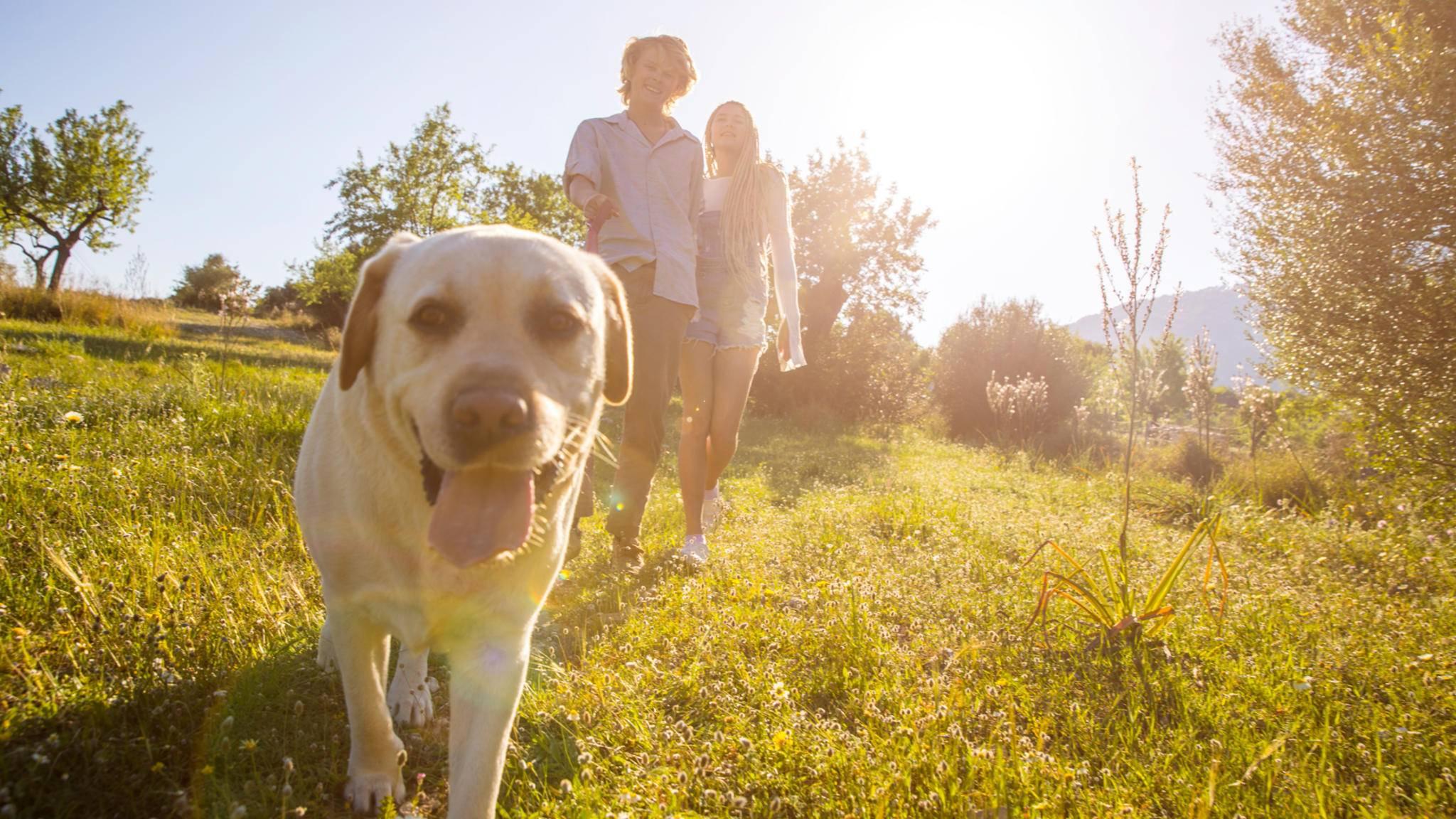 Paar Hund Sommer Park