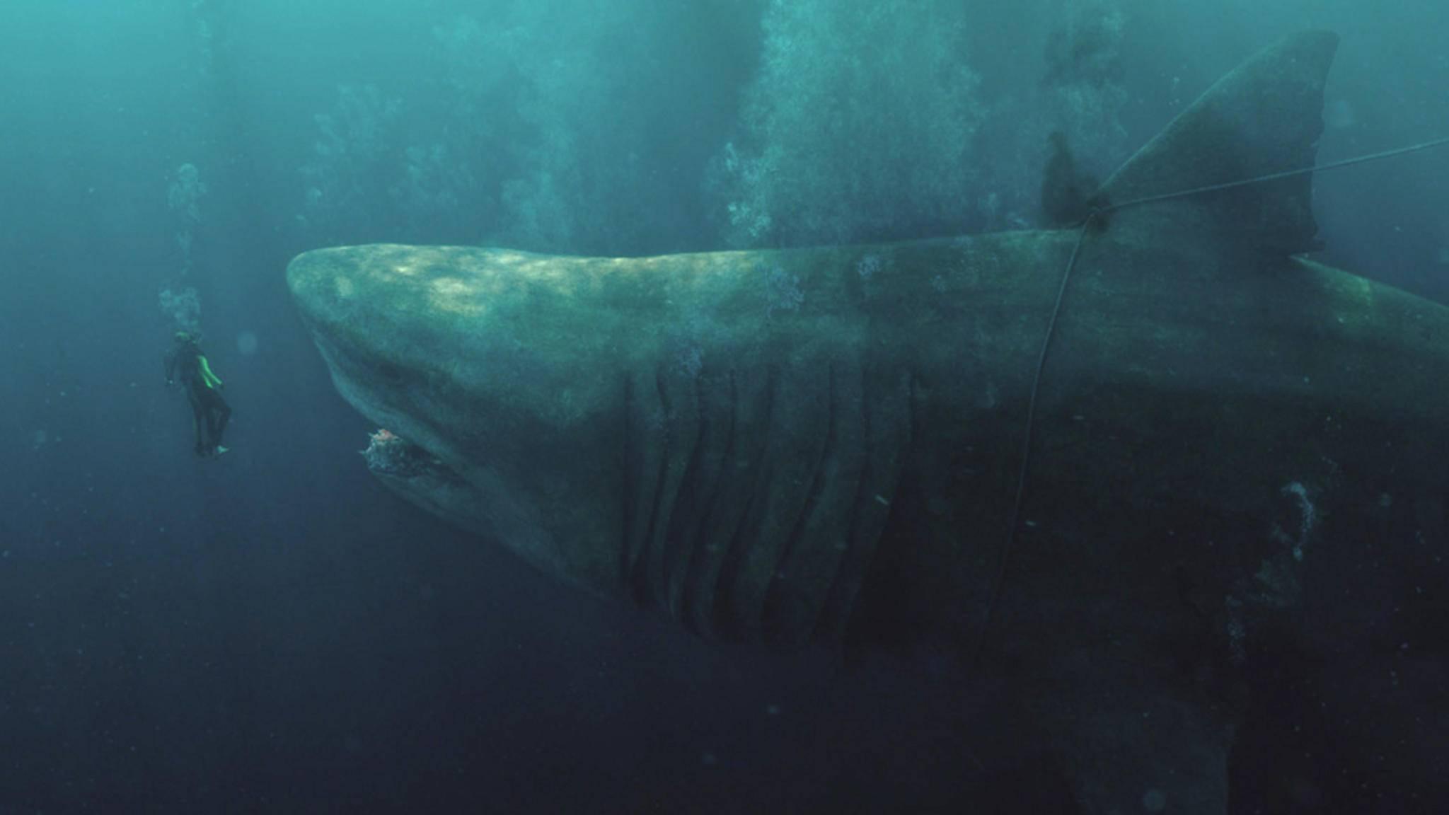 So einem gigantischen Hai möchte man niemals unter Wasser begegnen. Okay, eigentlich auch nicht der kleineren Version!