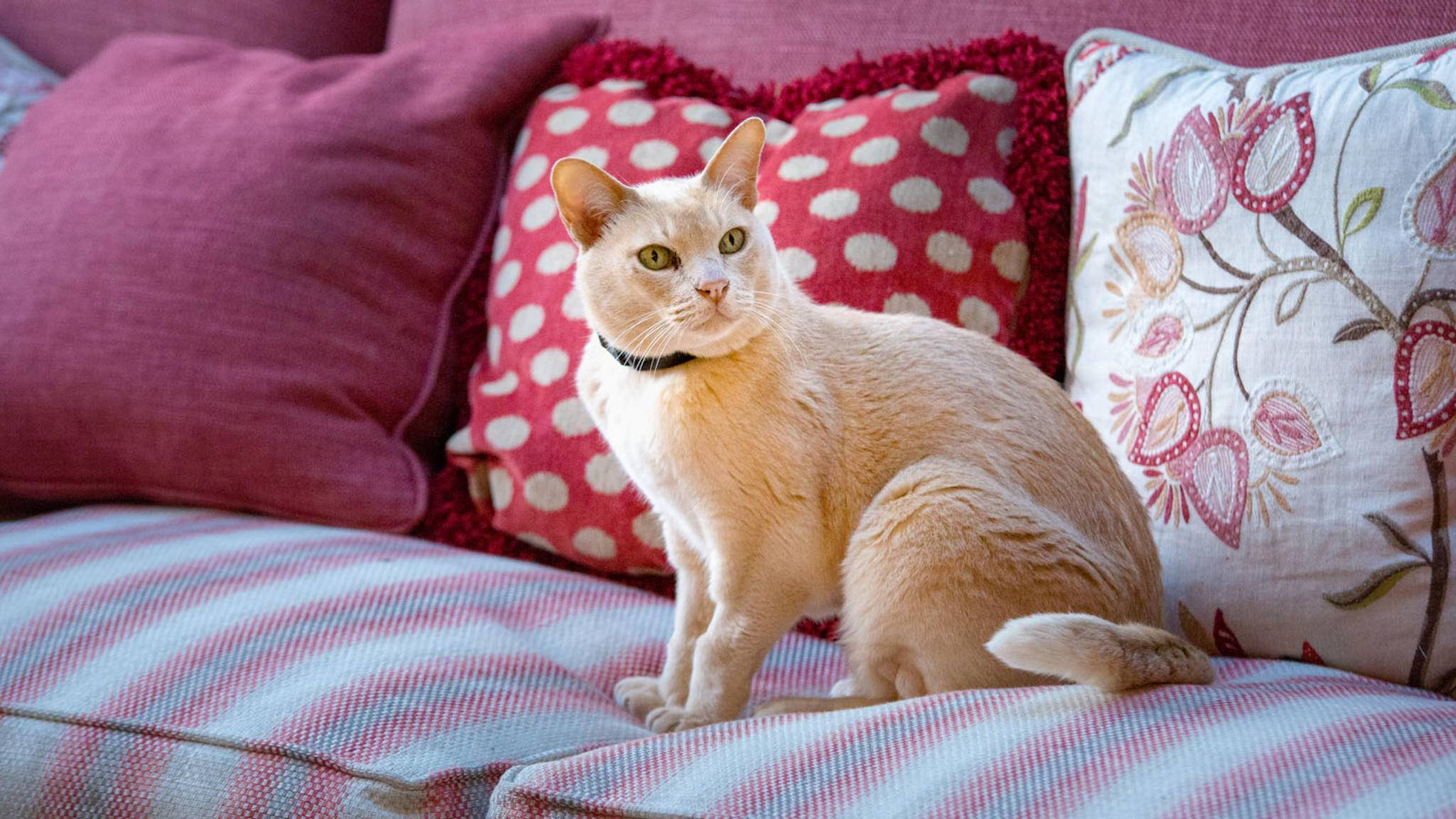 Immer, wenn Deine Katze mal nicht so gemütlich auf dem Sofa unterwegs ist, können GPS-Tracker praktische Hilfe leisten.
