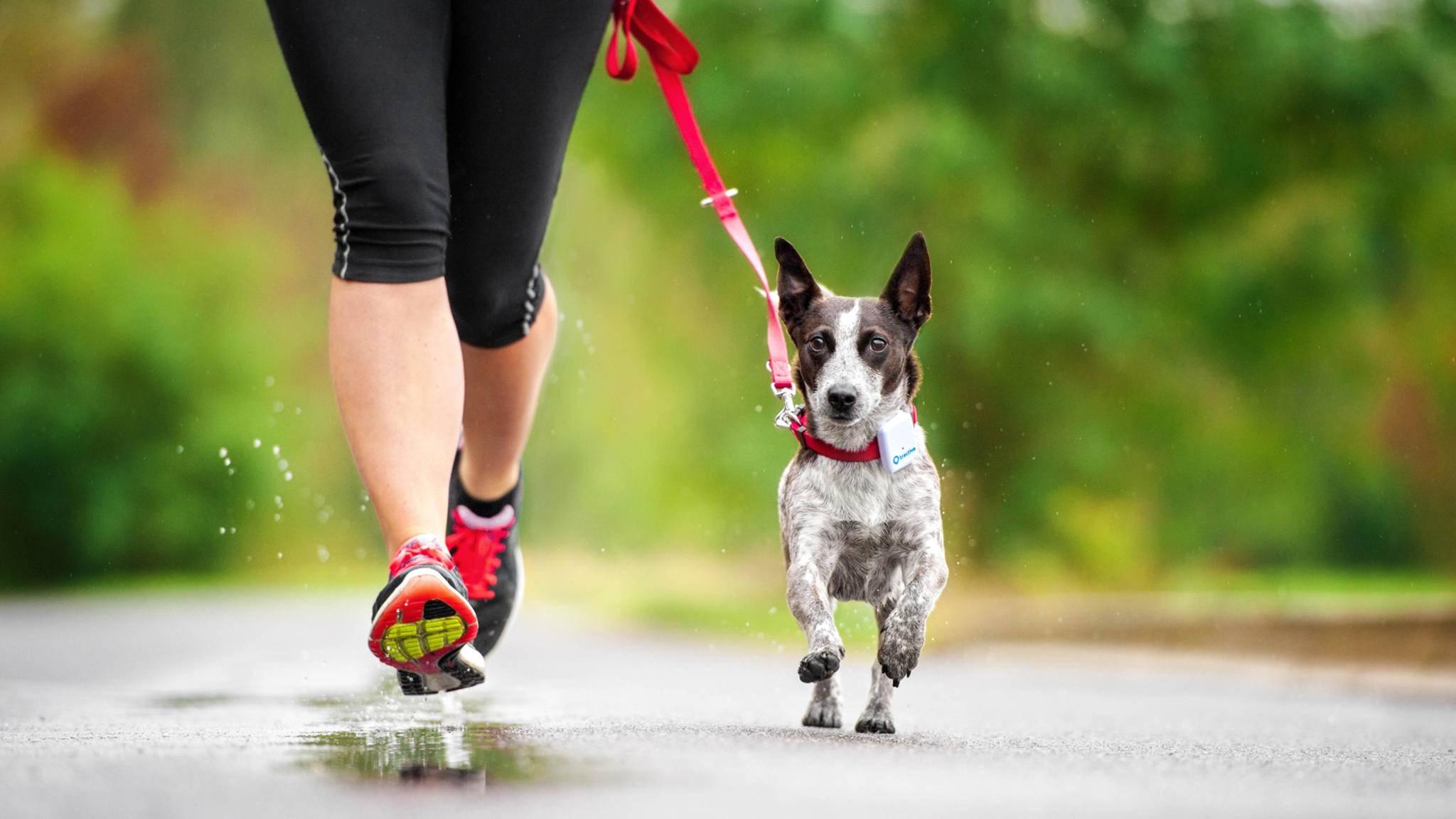 Wenn der Hund bei der Joggingtour Reißaus nimmt, sind Hunde-Tracker wie Tractive Gold wert.
