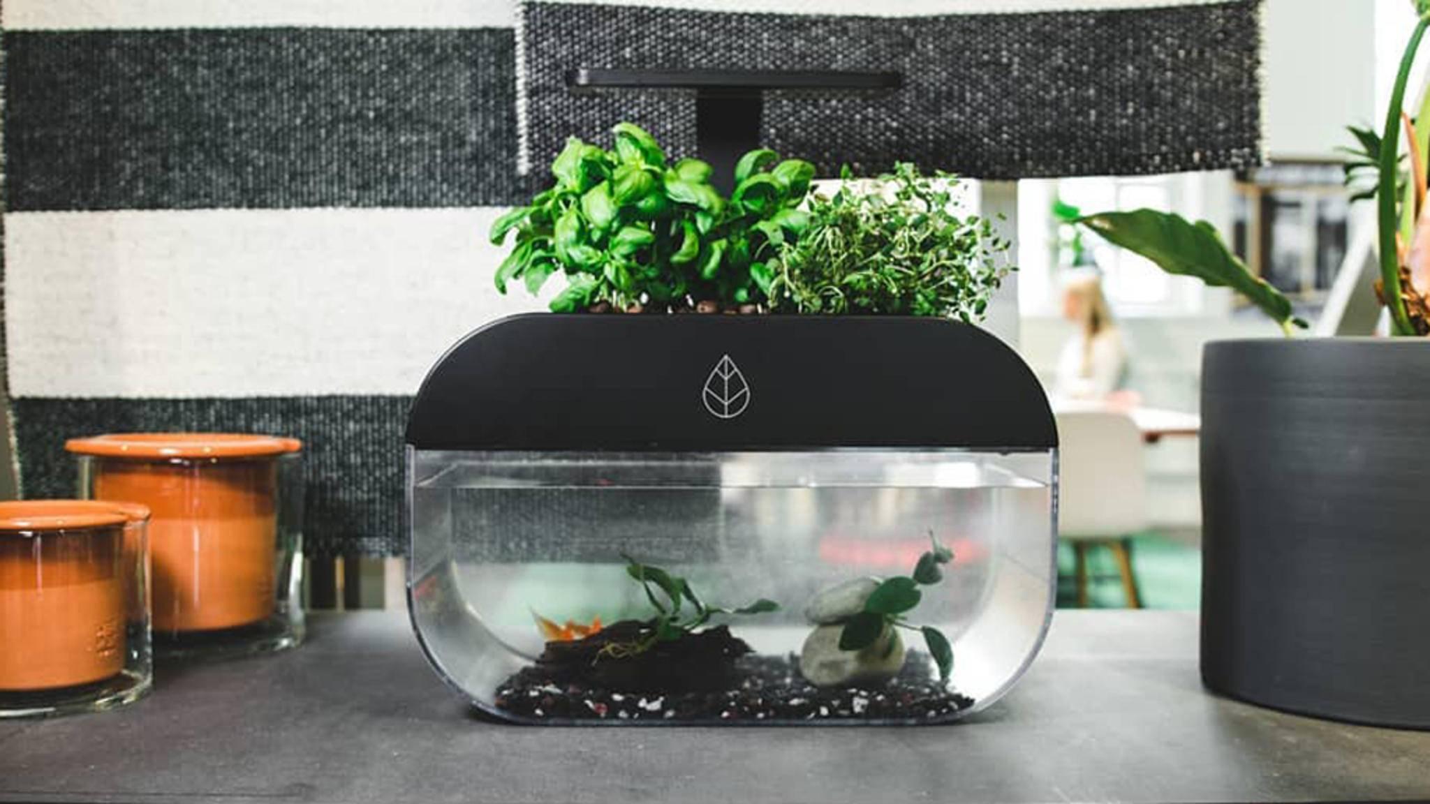EcoGarden ist eine smarte Kombination aus Aquarium und Pflanzenkübel.