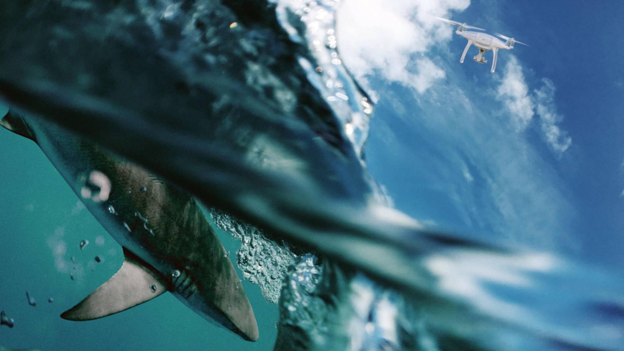 In Südafrika werden Drohnen zur Überwachung von Haien eingesetzt.