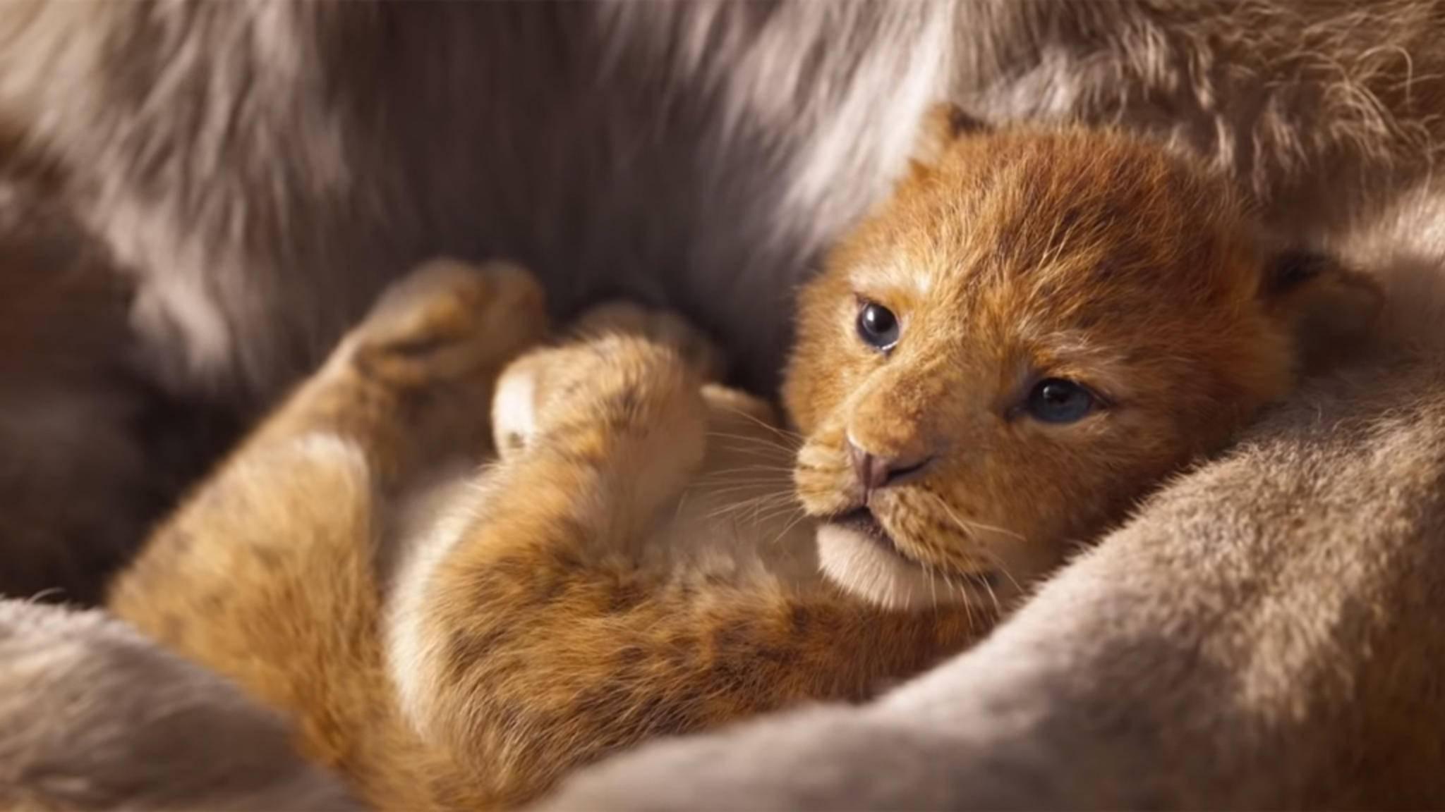 """Im Sommer 2019 kehrt der """"König der Löwen"""" auf die große Kinoleinwand zurück."""