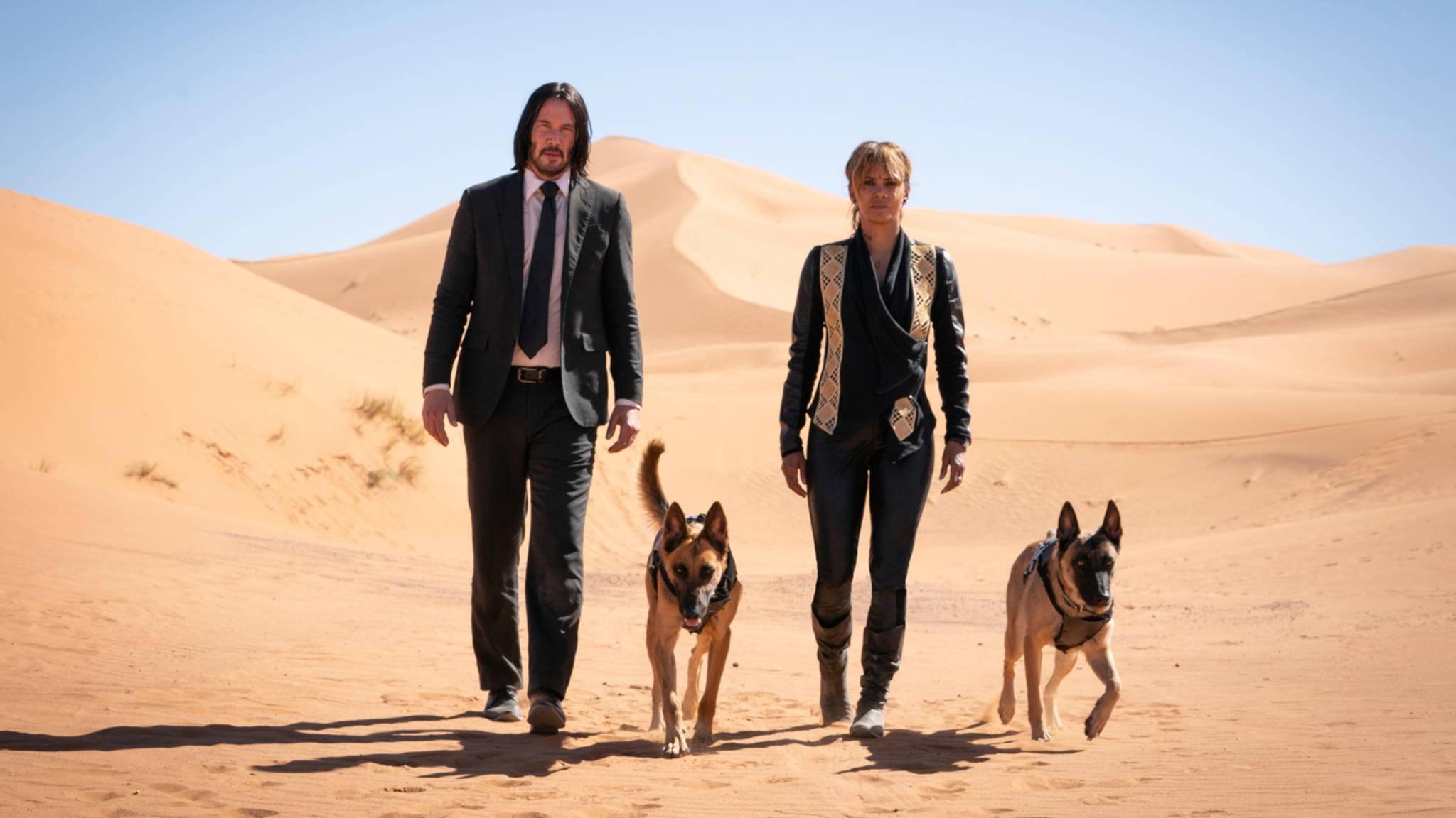 Eigentlich sind das ja Sofias Hunde ...