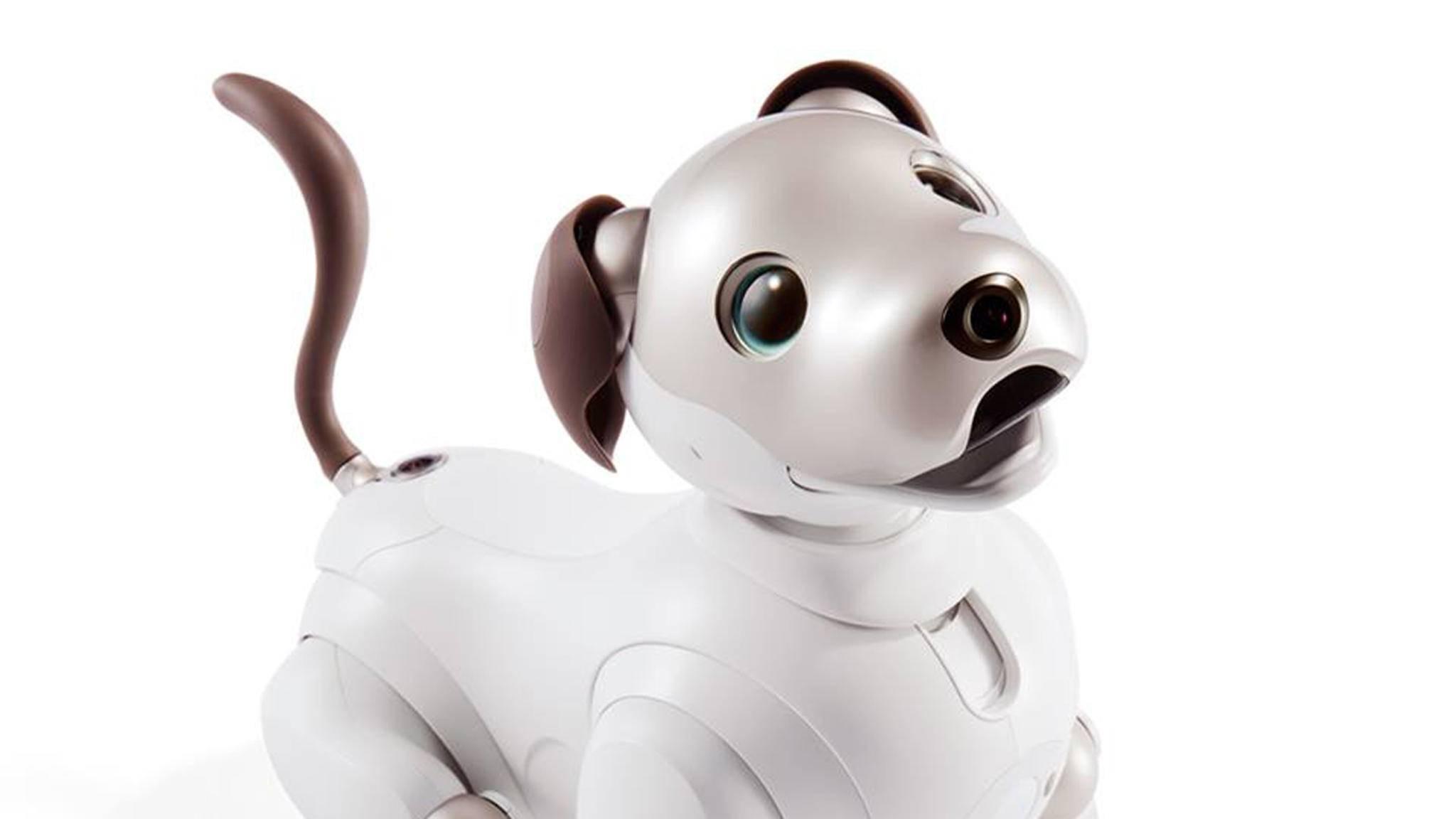 Aibo geht nach einem Software-Update auch auf Streife.