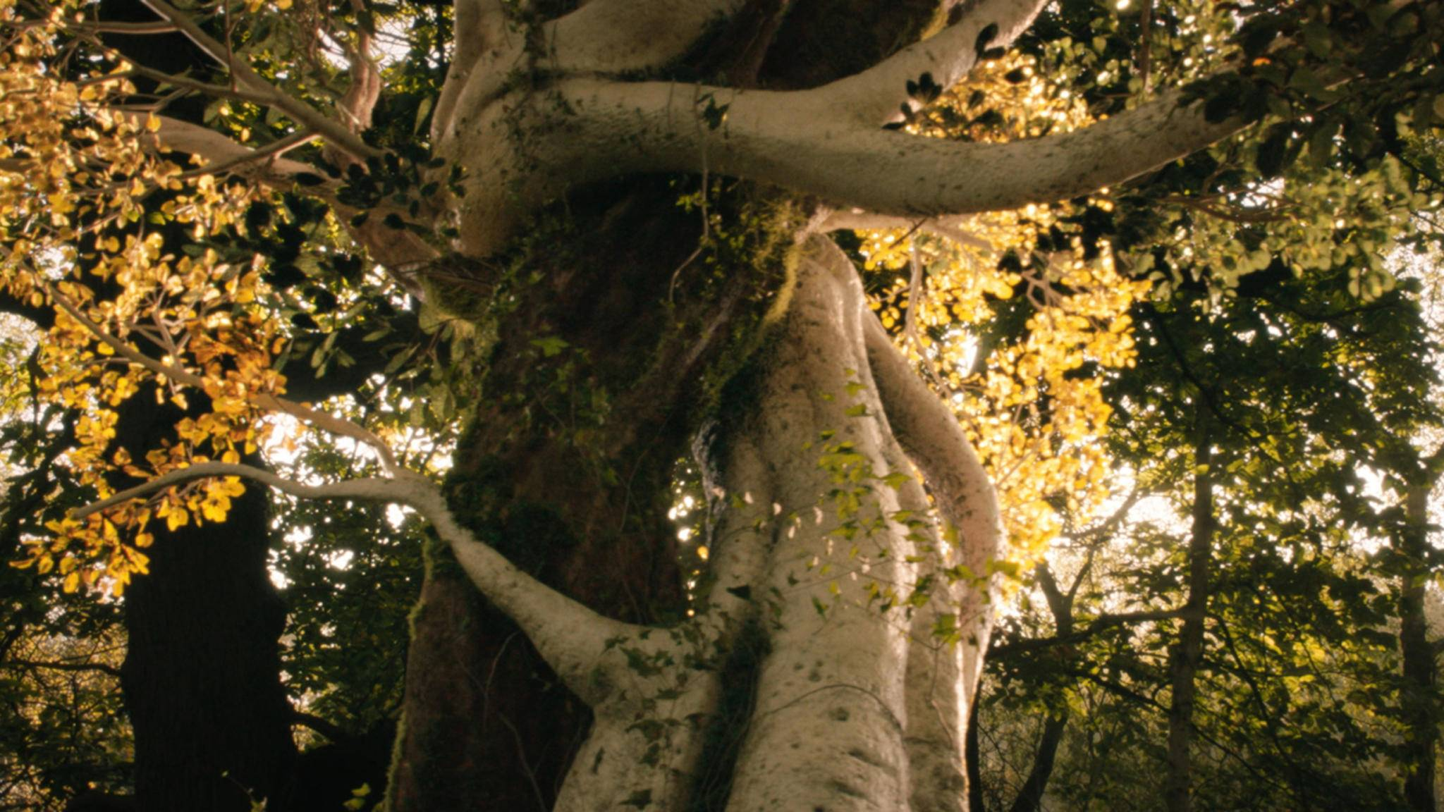 Die Wälder Mittelerdes bleiben nicht mehr lange leer.