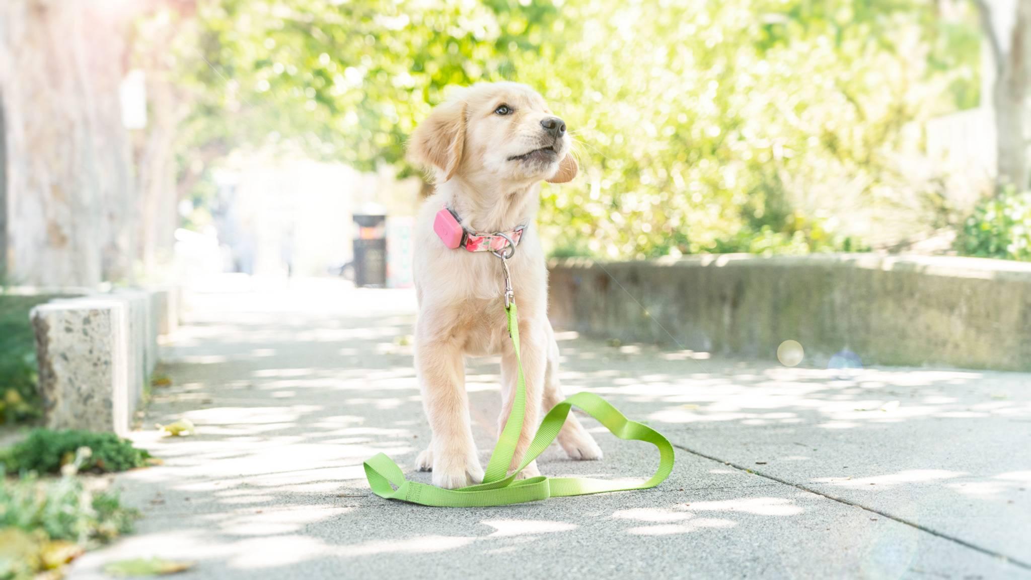 Ob jung oder alt: Whistle achtet auf Alter und Rasse des Hundes.
