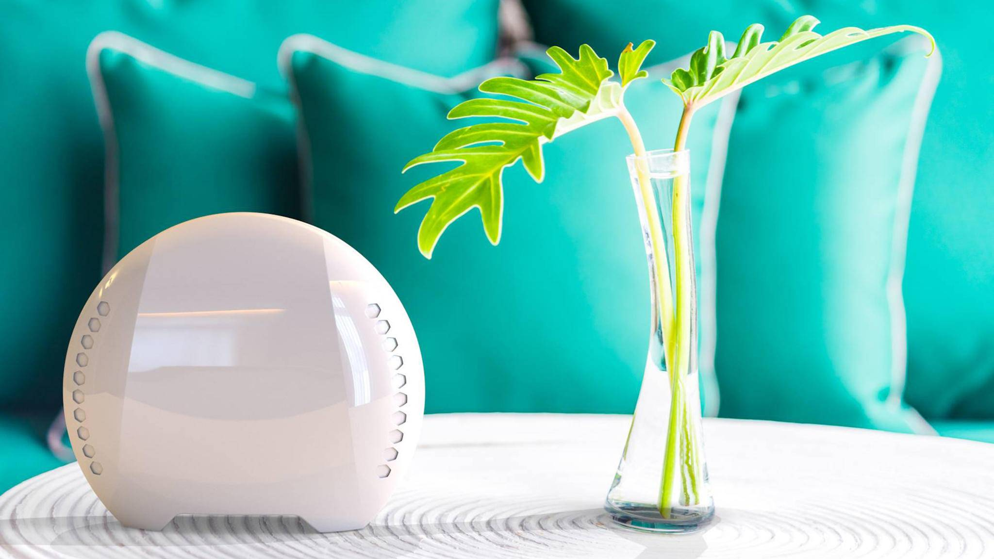 air-q Luftanalysator pflanze tisch kissen
