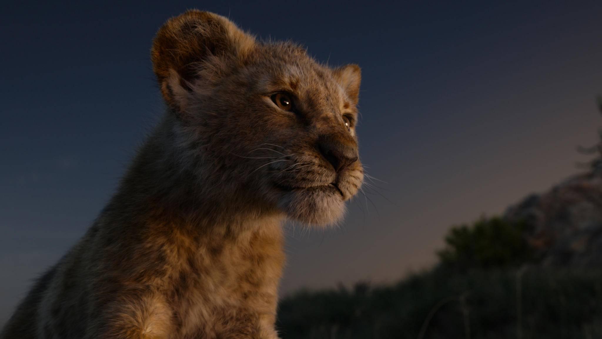 """Seit rund einer Woche verzaubert die Realverfilmung von """"Der König der Löwen"""" die Kinogänger."""