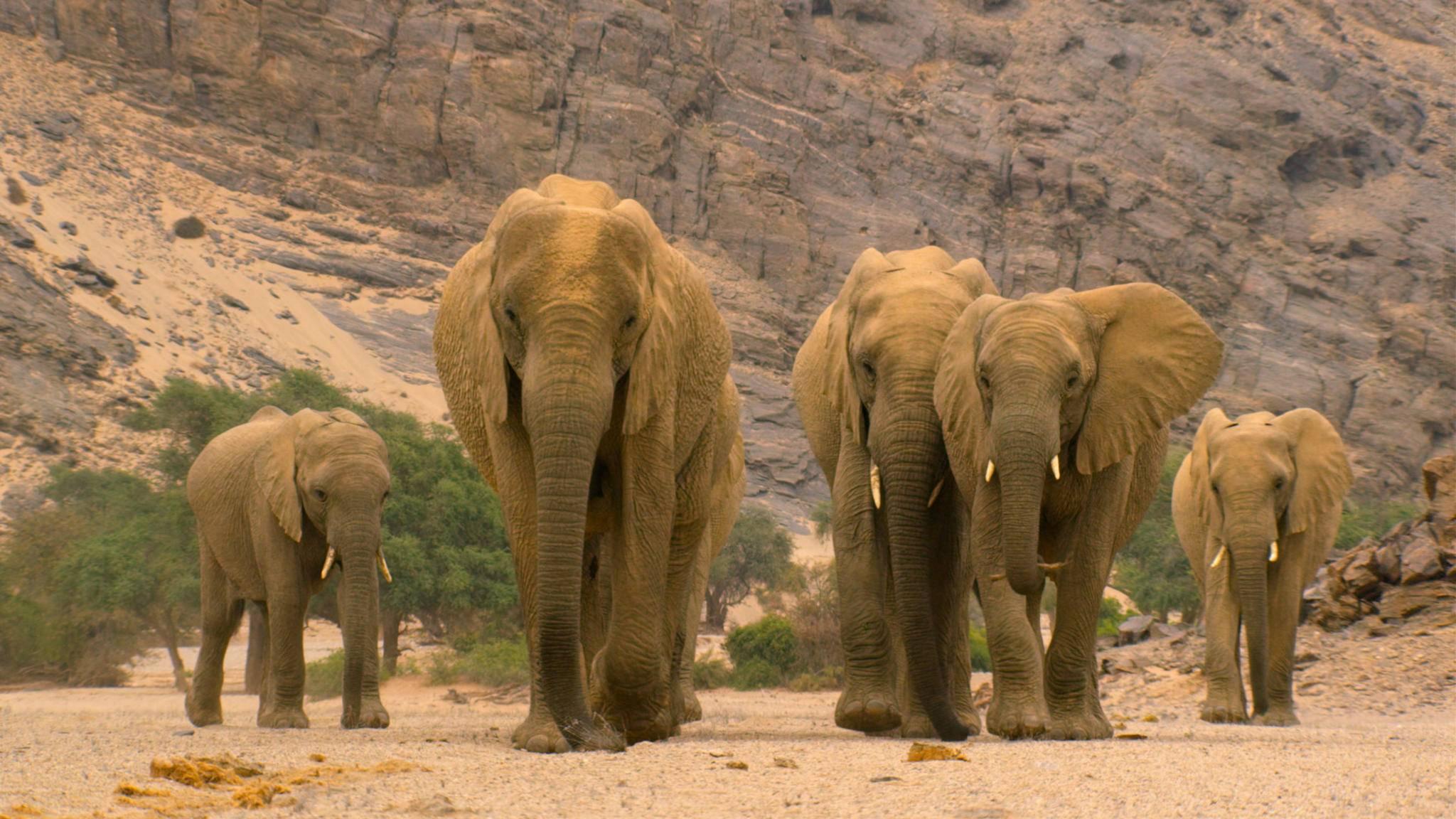 netflix-unser-planet-elefanten