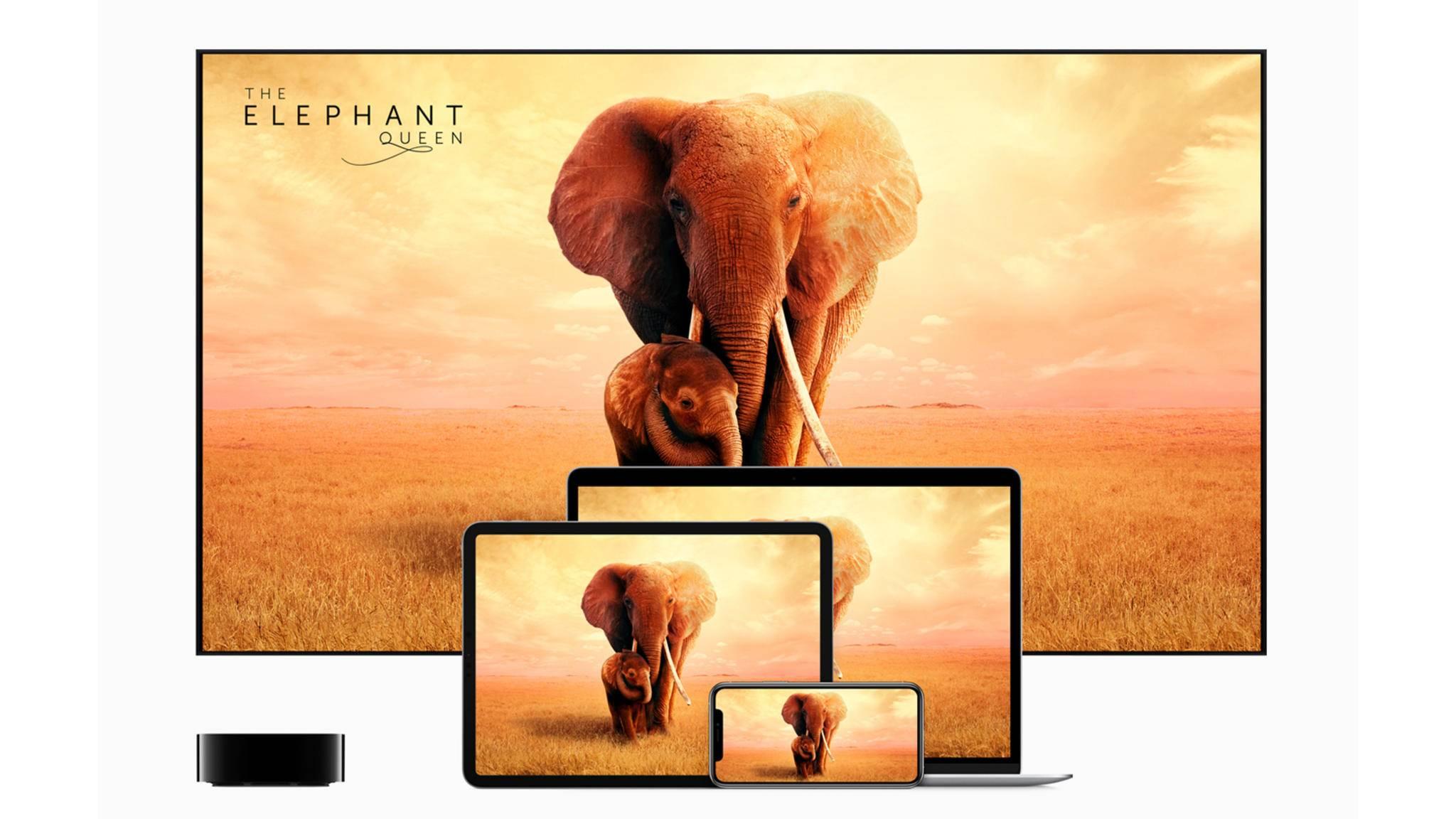 Apple TV+ Elephant Queen